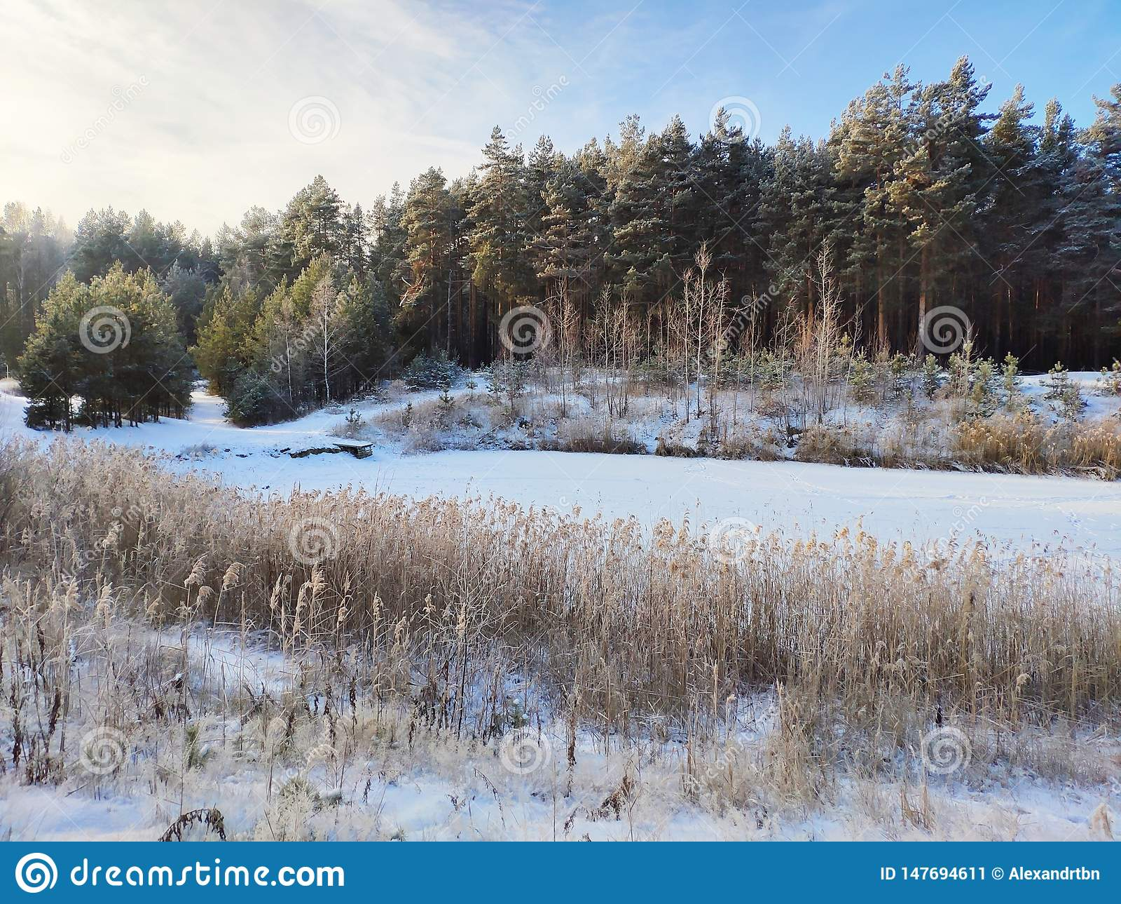 Lac winter dans la for?t
