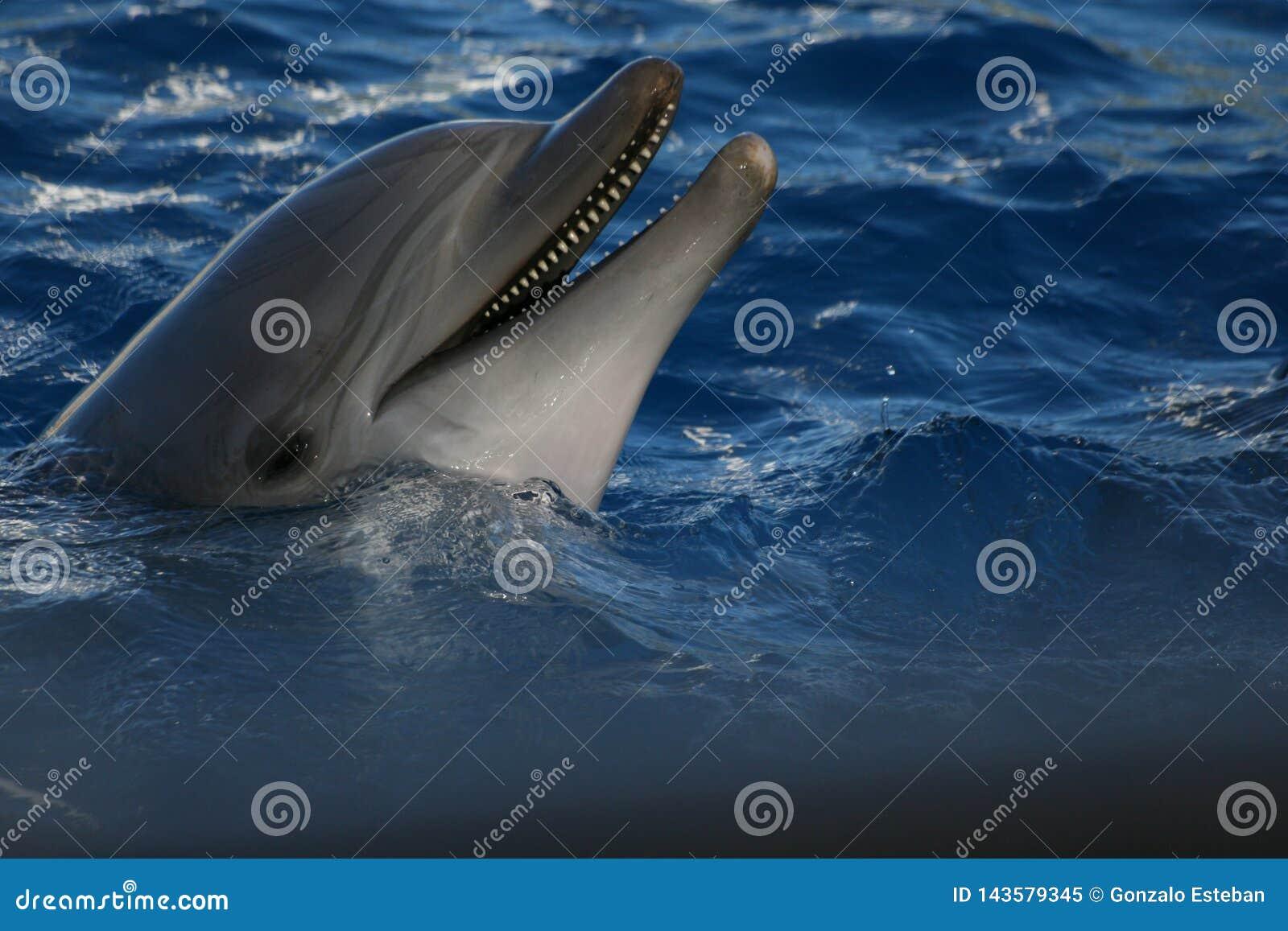 Lachender Delphin