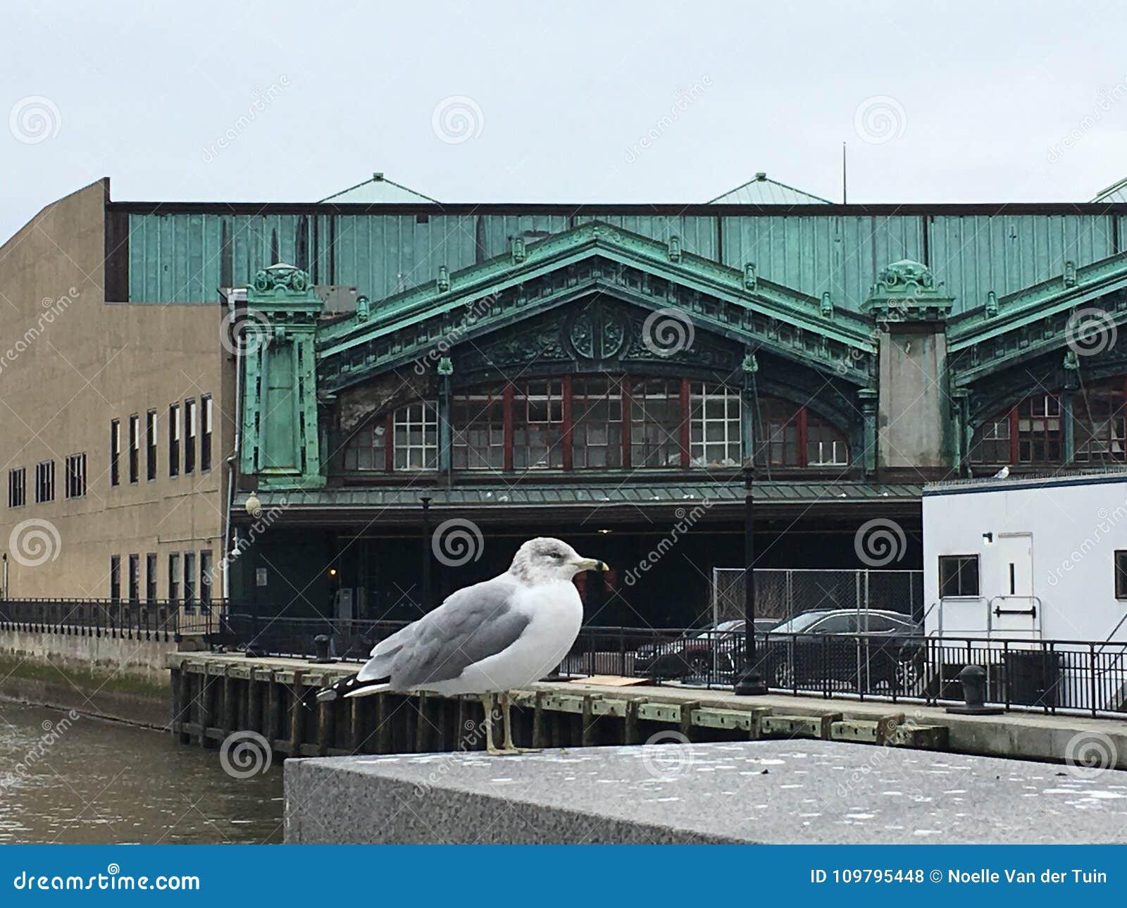 Lackawanna Seagull