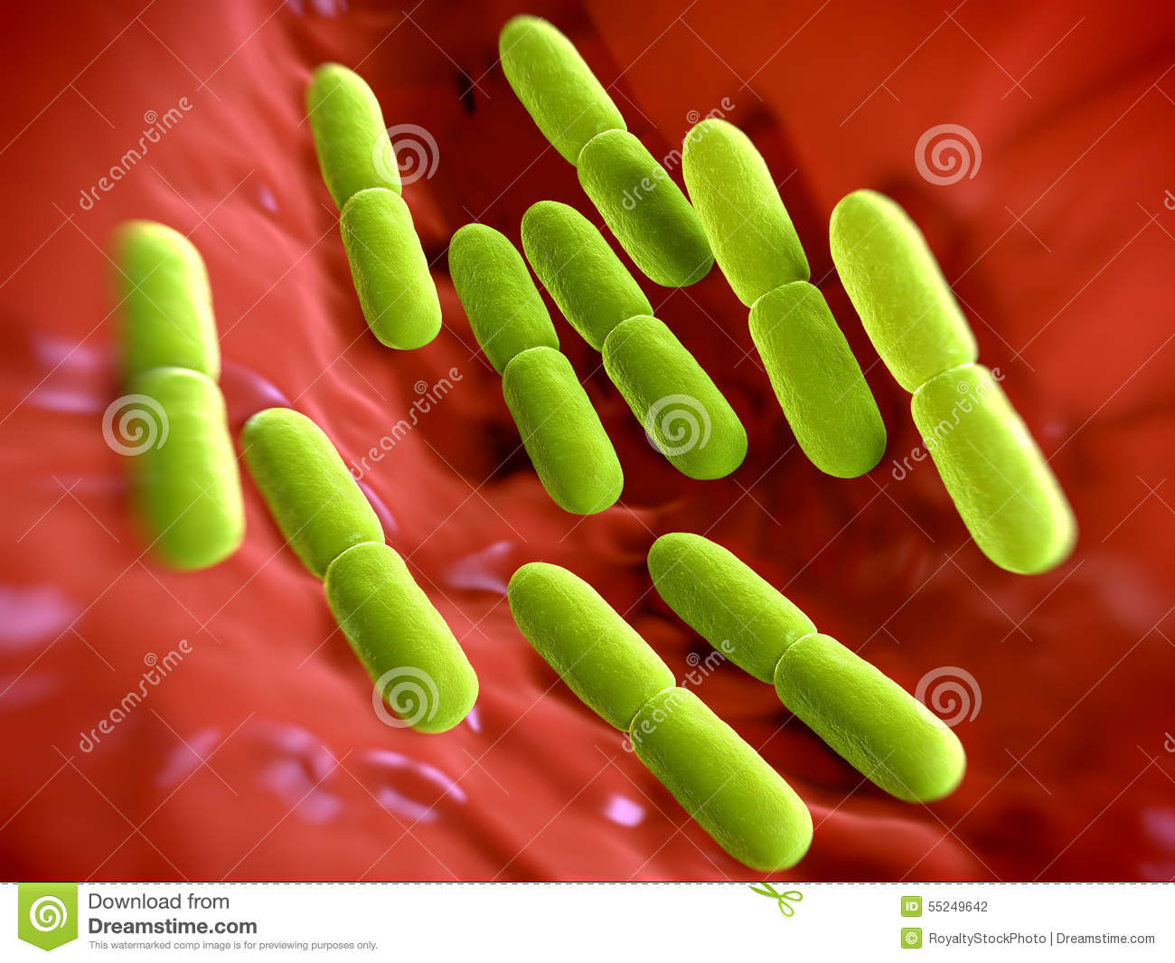 Lactobacillus Bulgaricus Bacteria Stock Illustration - Image: 55249642