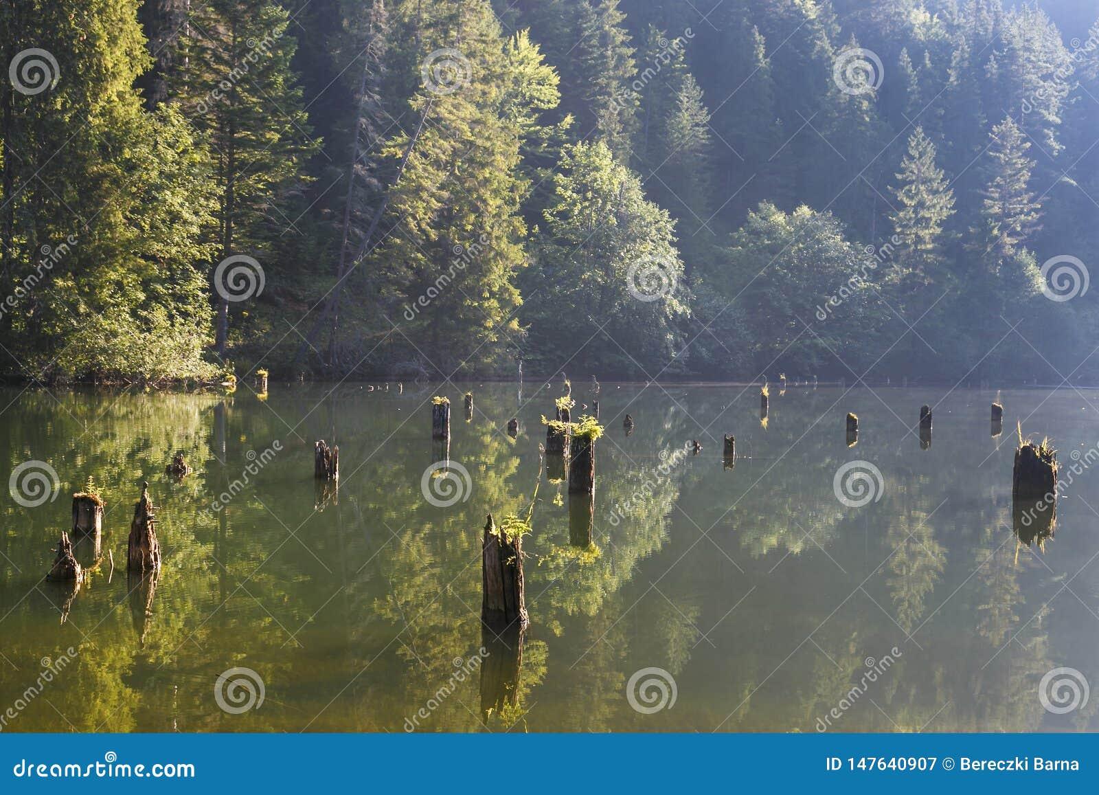 Lacul Rosu - Czerwony jezioro w lato ranku wsch?d s?o?ca Carpathians, Rumunia