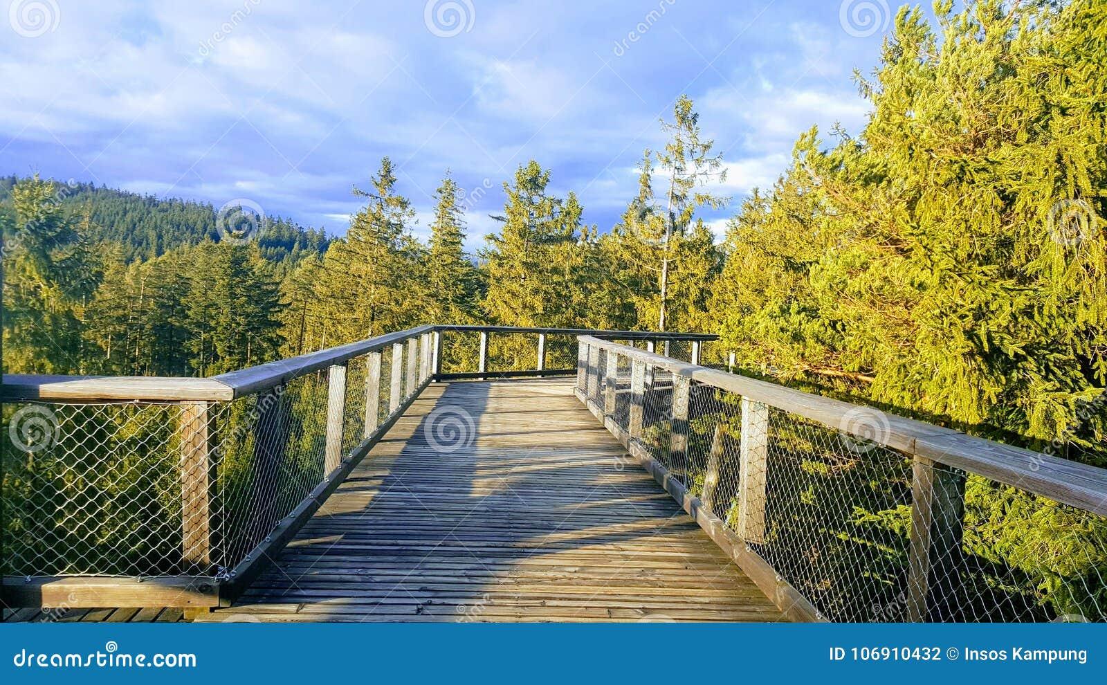 Śladów drzew Lipno punkt obserwacyjny, Czechia