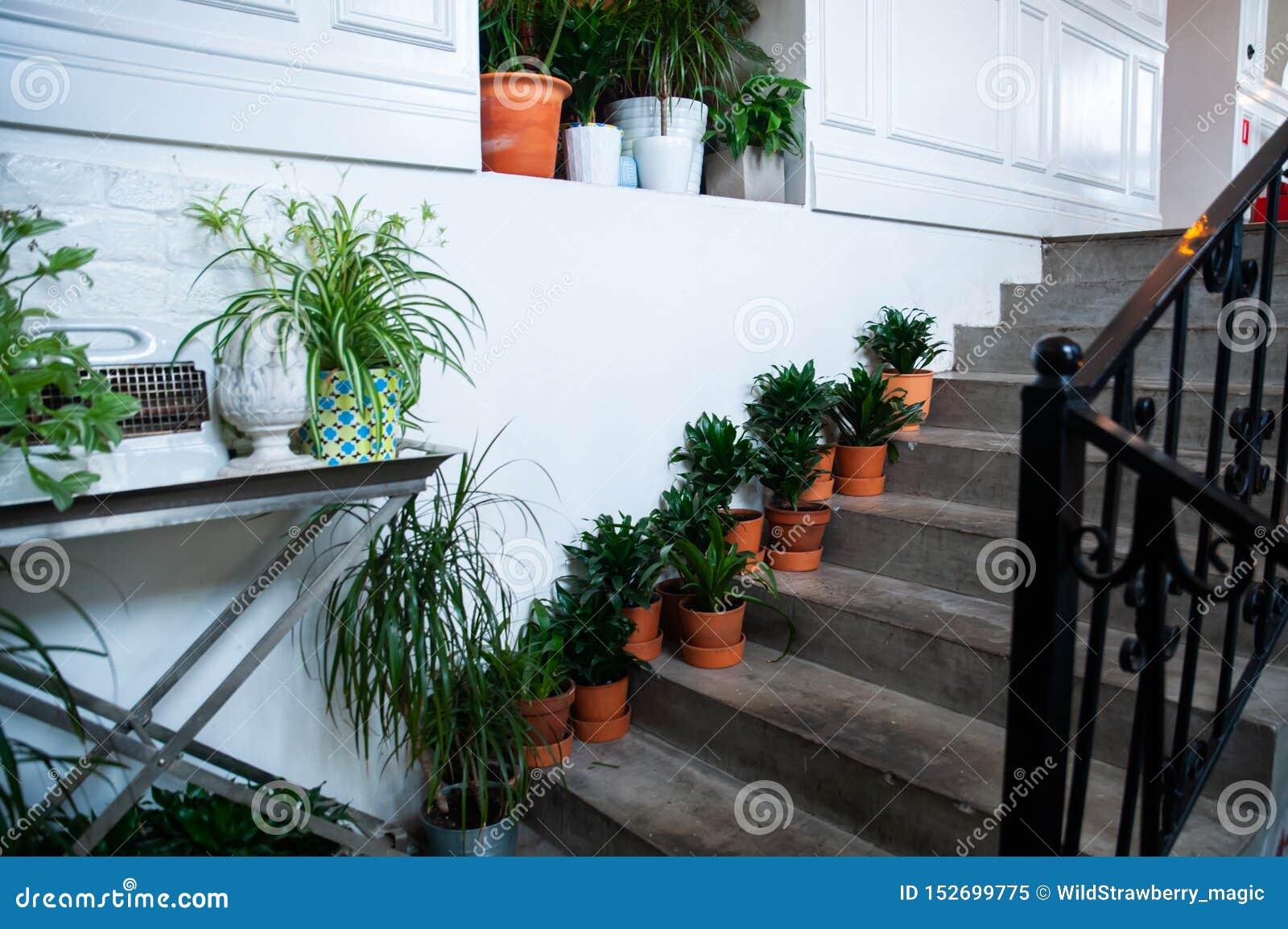 Lade in växter på trappan, stilfull dekor