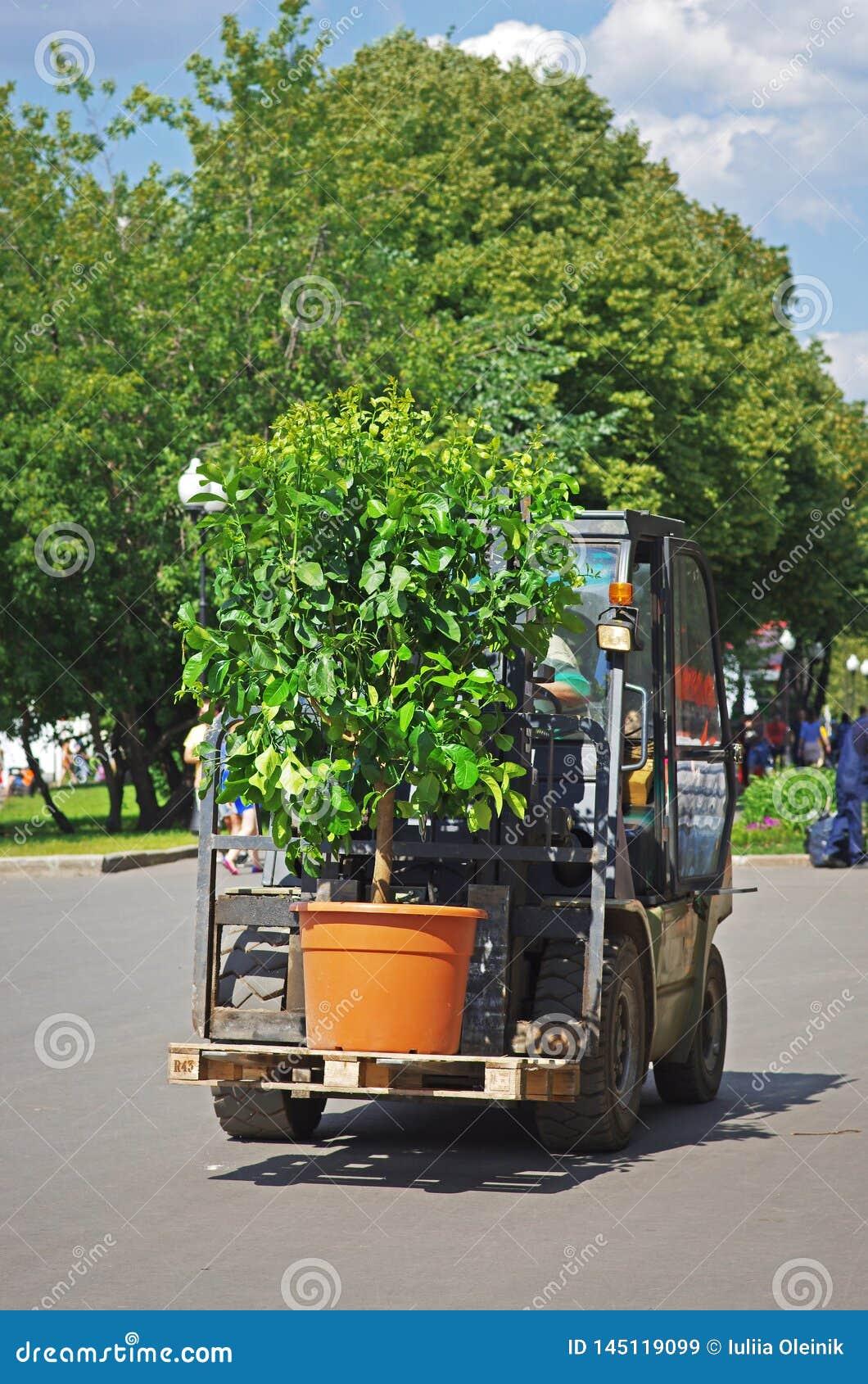 Lader die de installatie op een pallet in park Gorkogo in Moskou vervoeren
