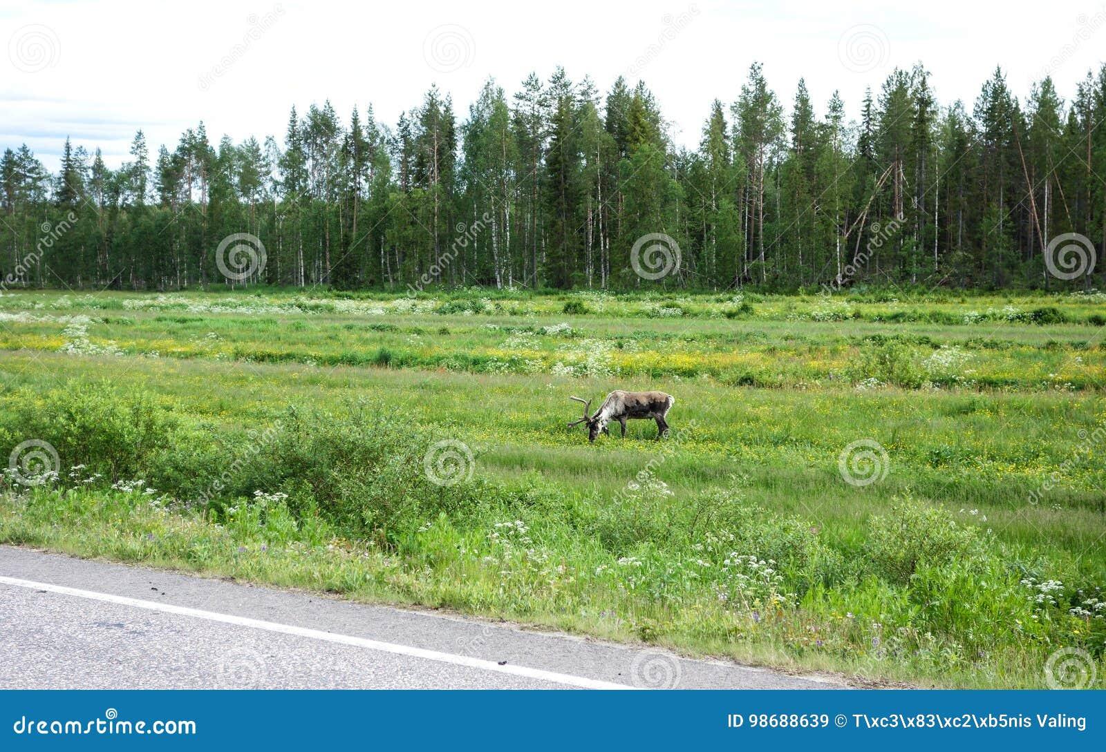 Lado de alimentación del reno del camino