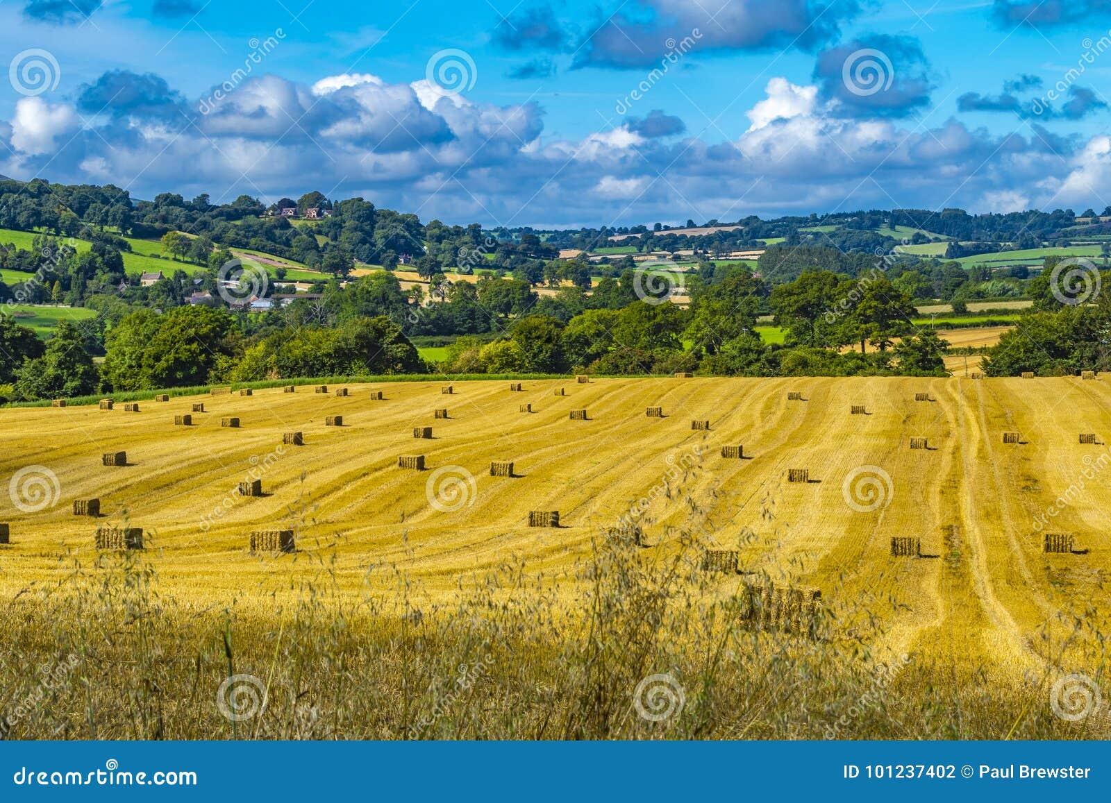 Lado do país de Shropshire Campos dourados do rolamento bonito dos pacotes de feno e céu azul
