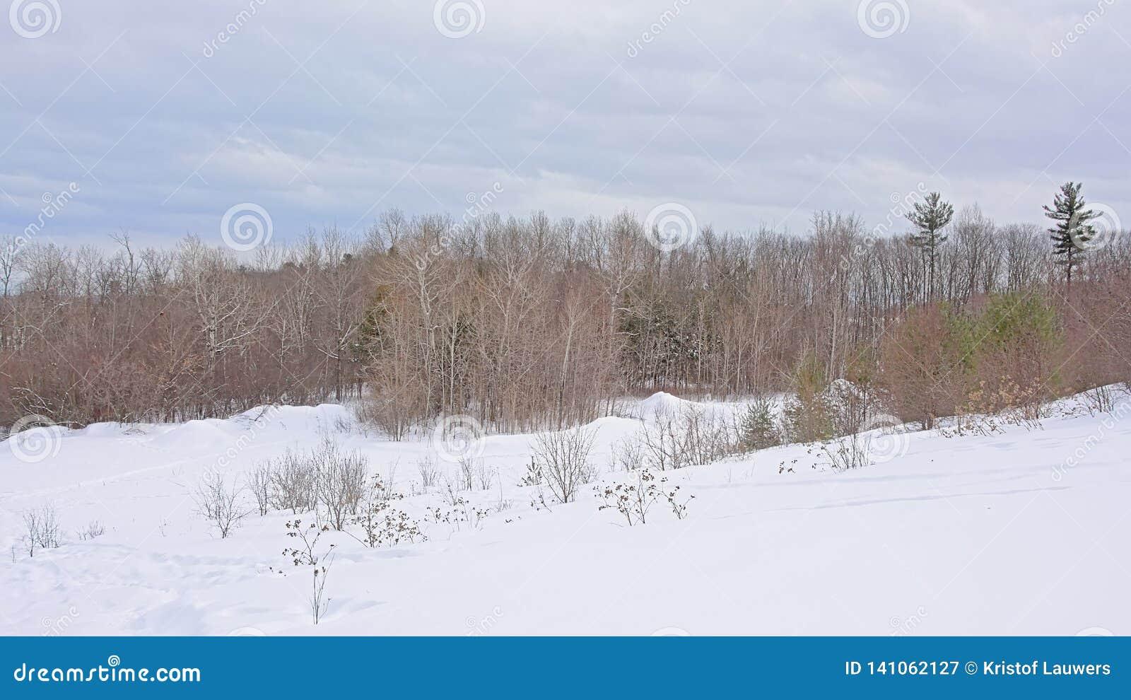 Lado rodante de la colina cubierto en nieve con los árboles desnudos y coníferos y los arbustos
