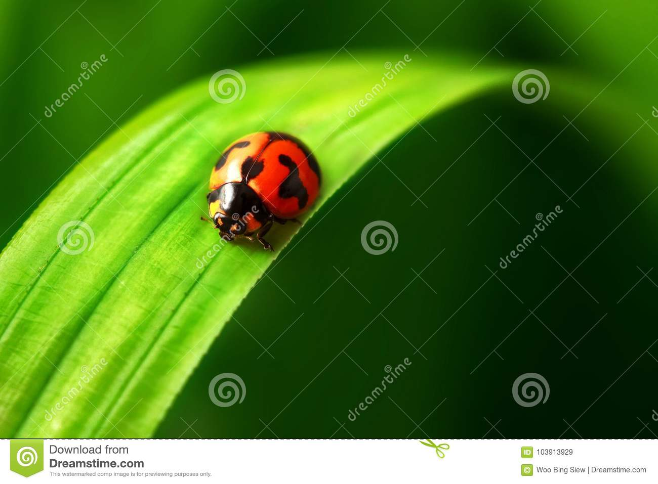 Lady bird on green leave