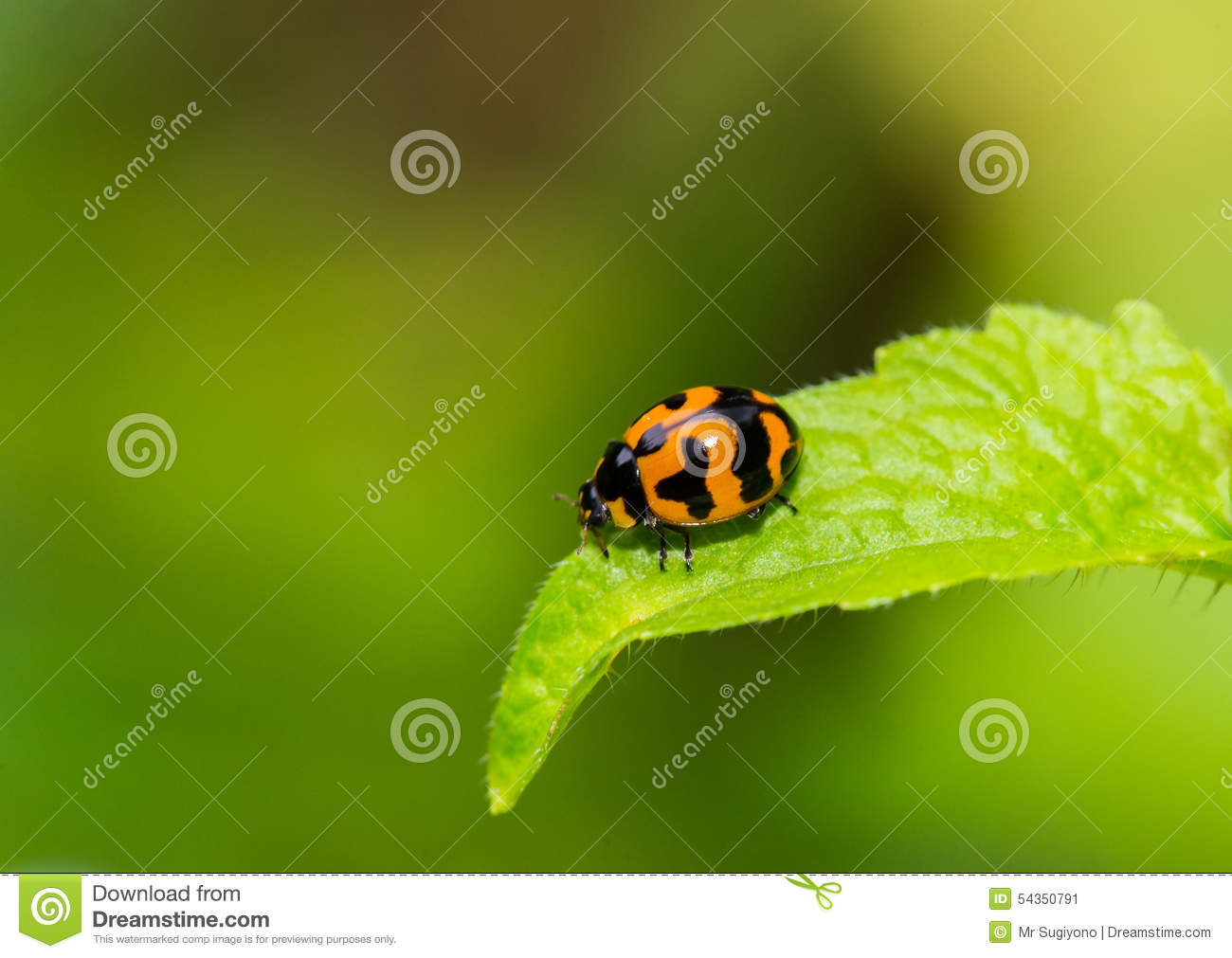 Lady bug on the green leaf stock image. Image of bamboo - 54350791