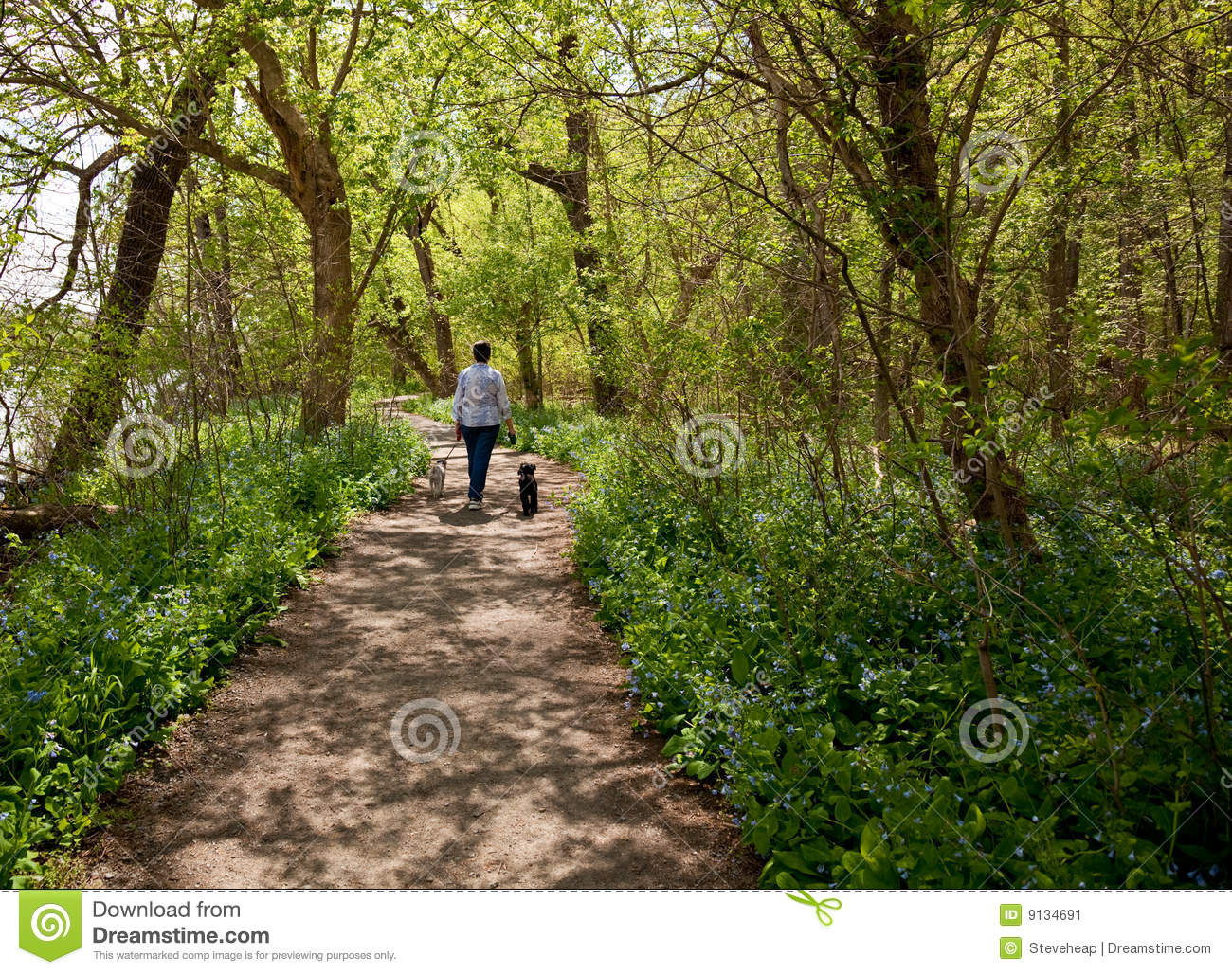 Lady with dogs on path in Bluebells
