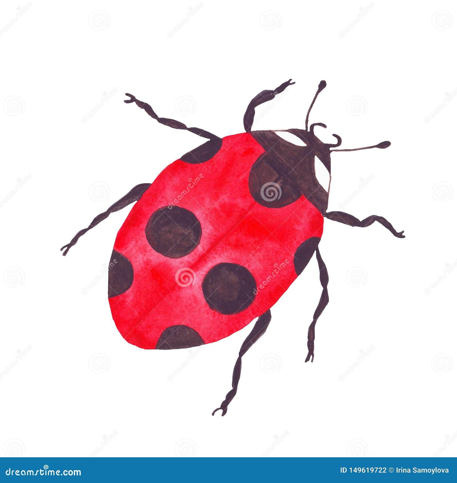 Ladybird жука насекомого ladybug акварели красный яркий
