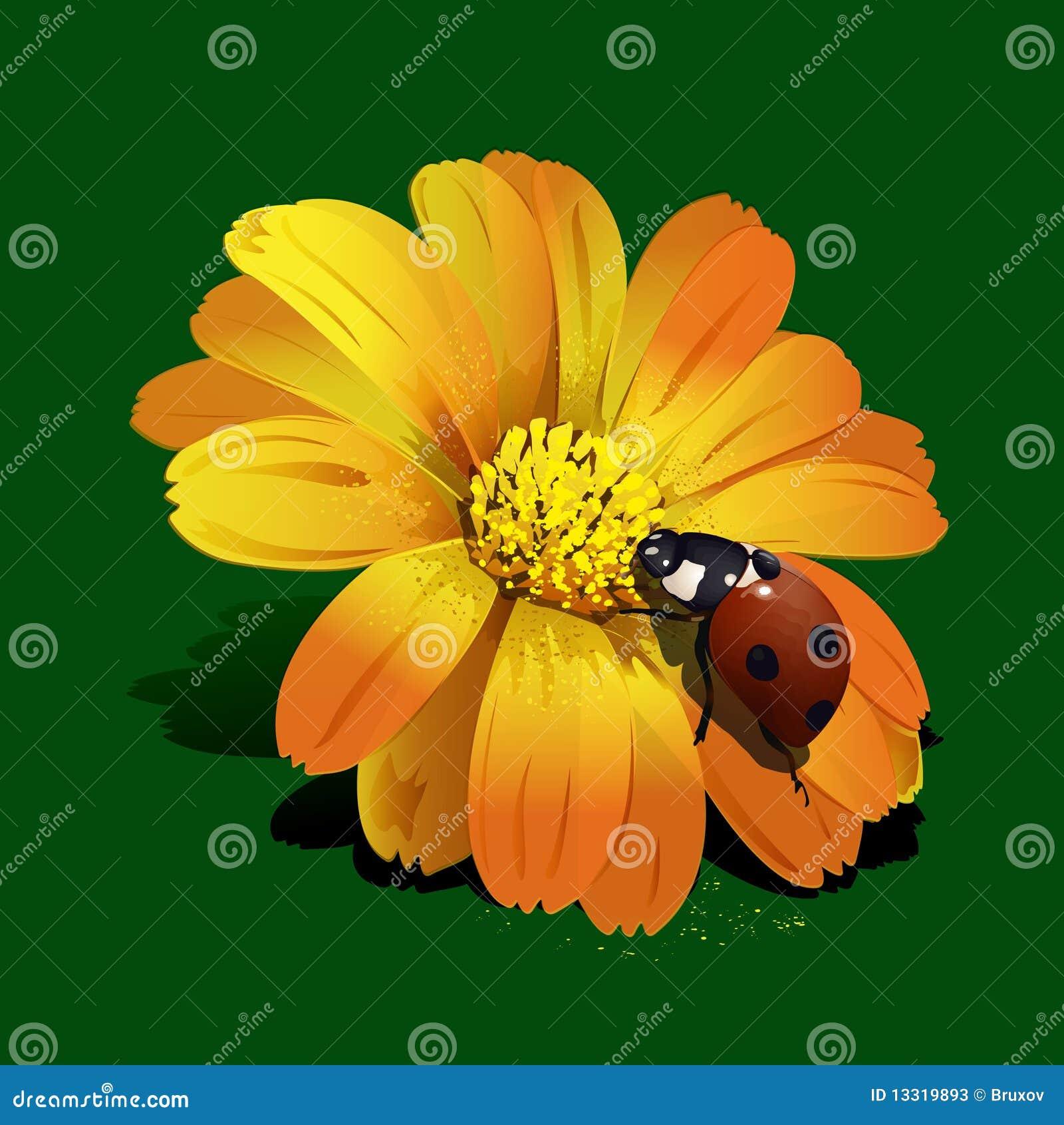 https://thumbs.dreamstime.com/z/ladybird-flower-13319893.jpg