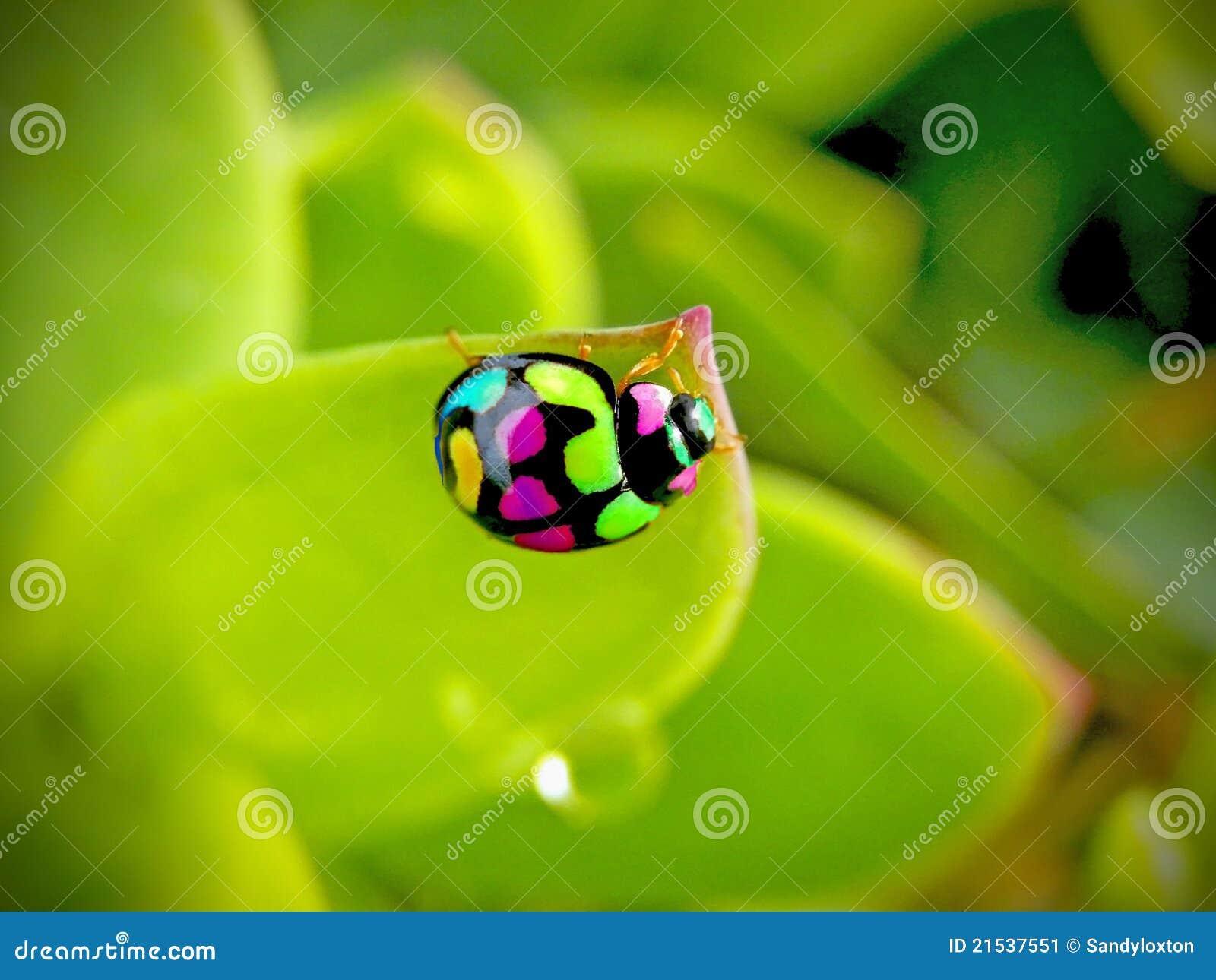 Ladybird Fun Stock Image Image 21537551