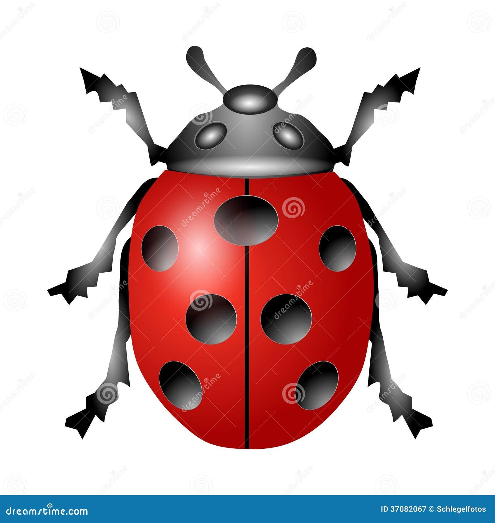 Download Ladybird odizolowywający ilustracji. Ilustracja złożonej z odosobniony - 37082067