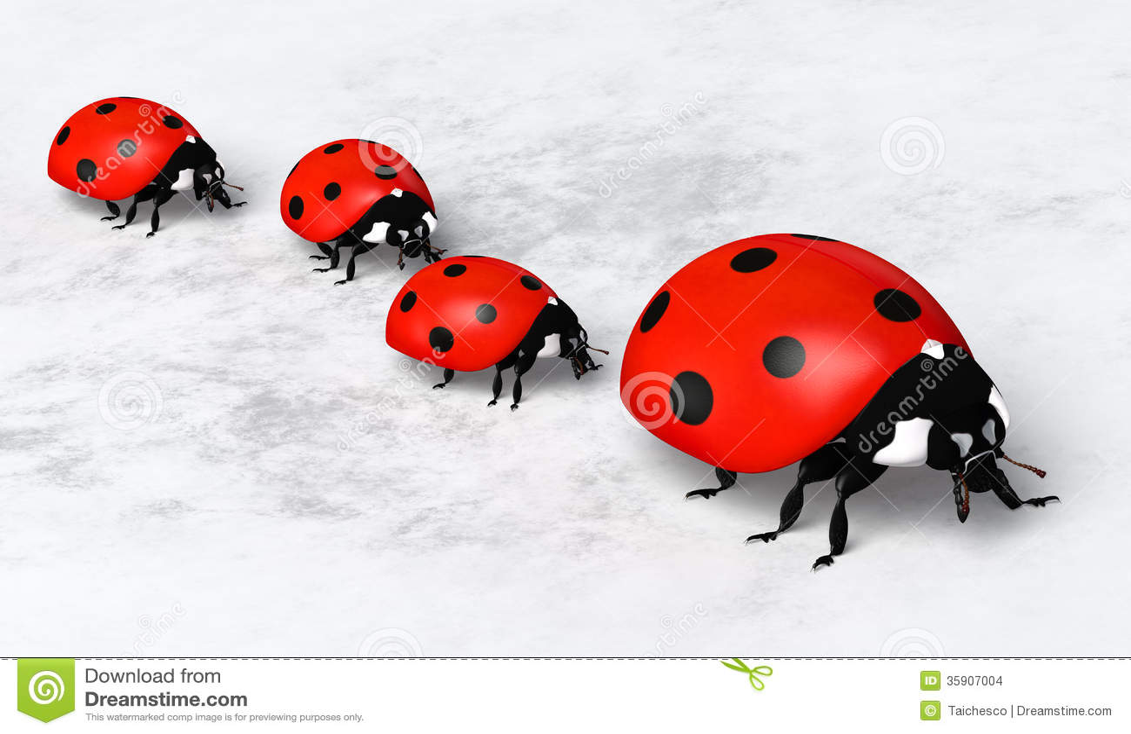 The ladybirds the wild wild world of jayne mansfield 2