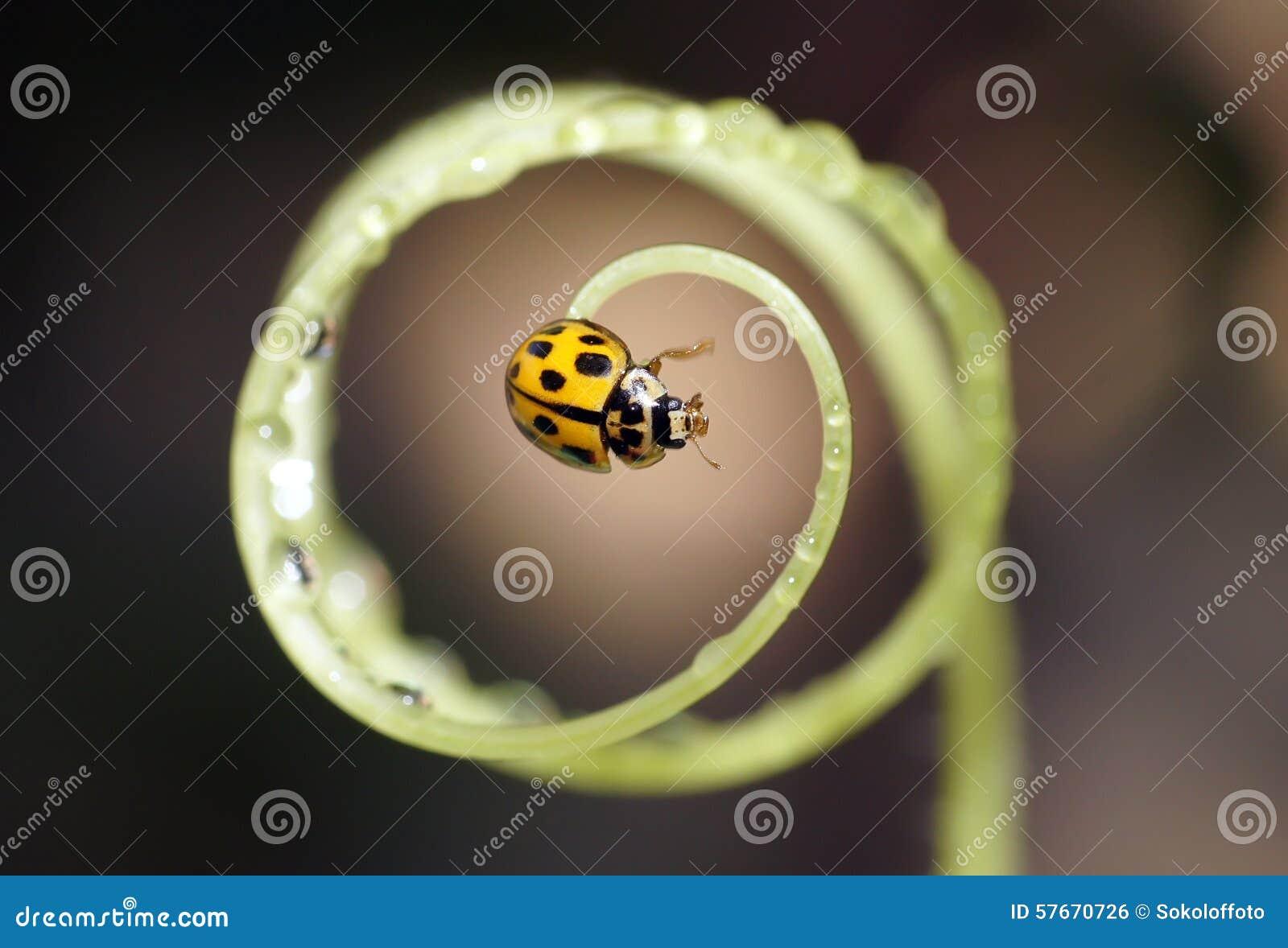 Ladybug на цветках