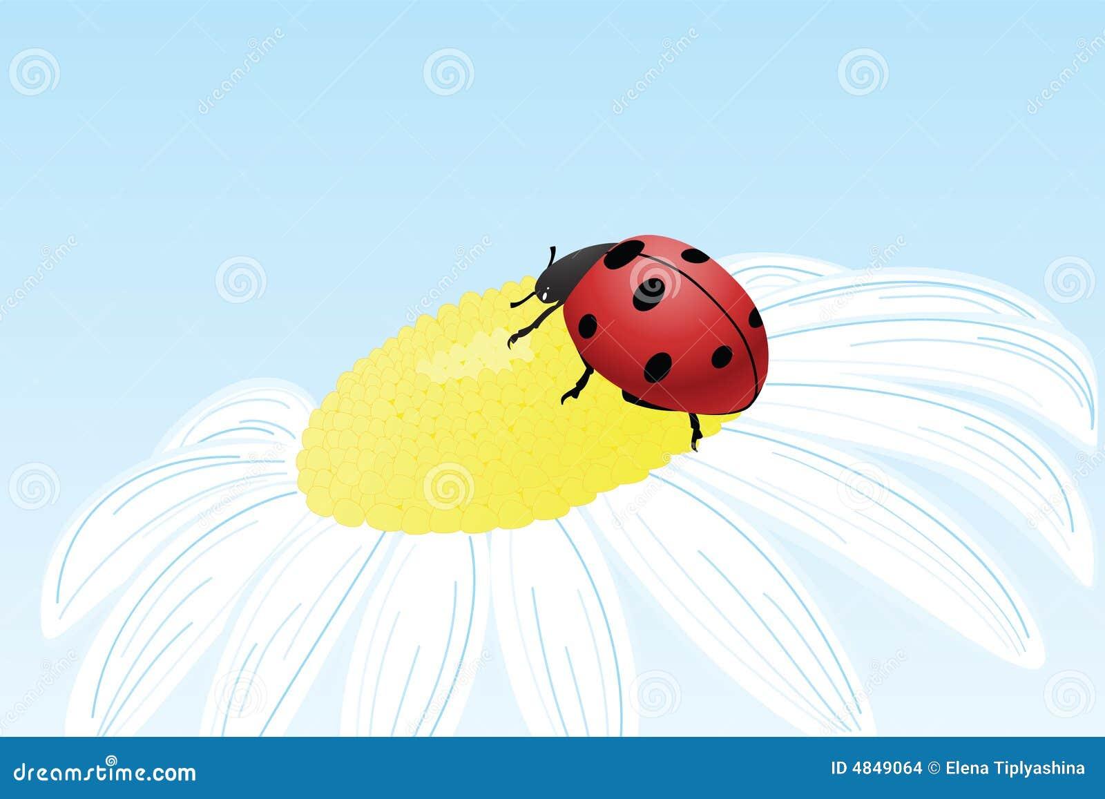 Ladybug цветка стоцвета