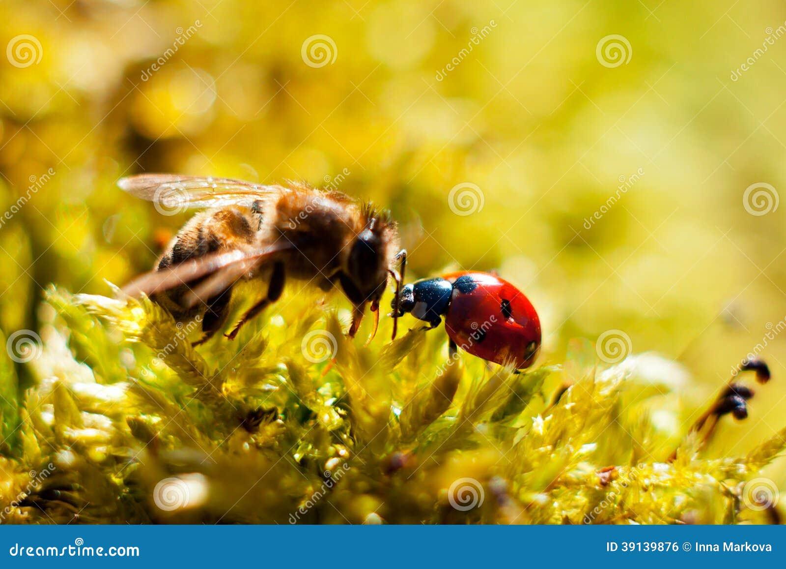 Ladybug bee stock photo image 39139876 for Ahuyentar abejas jardin