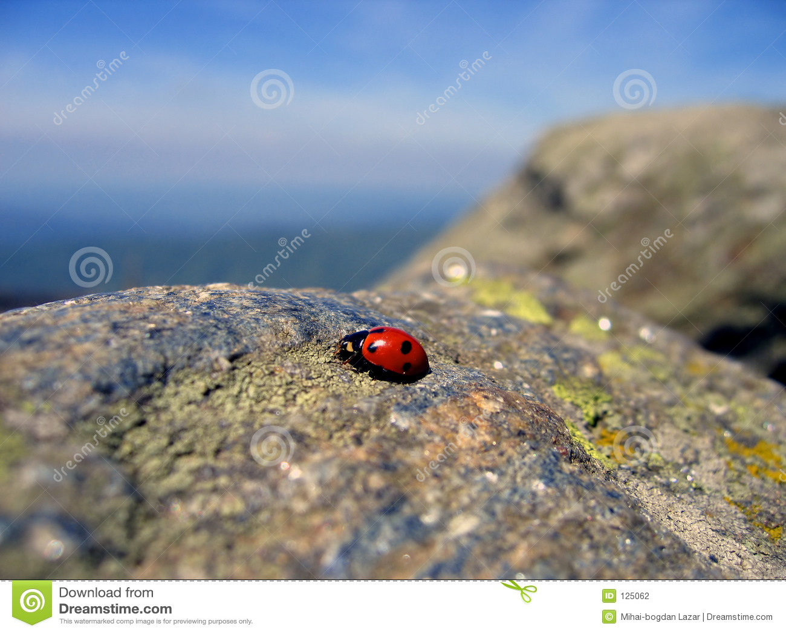 Ladybug di viaggio 2