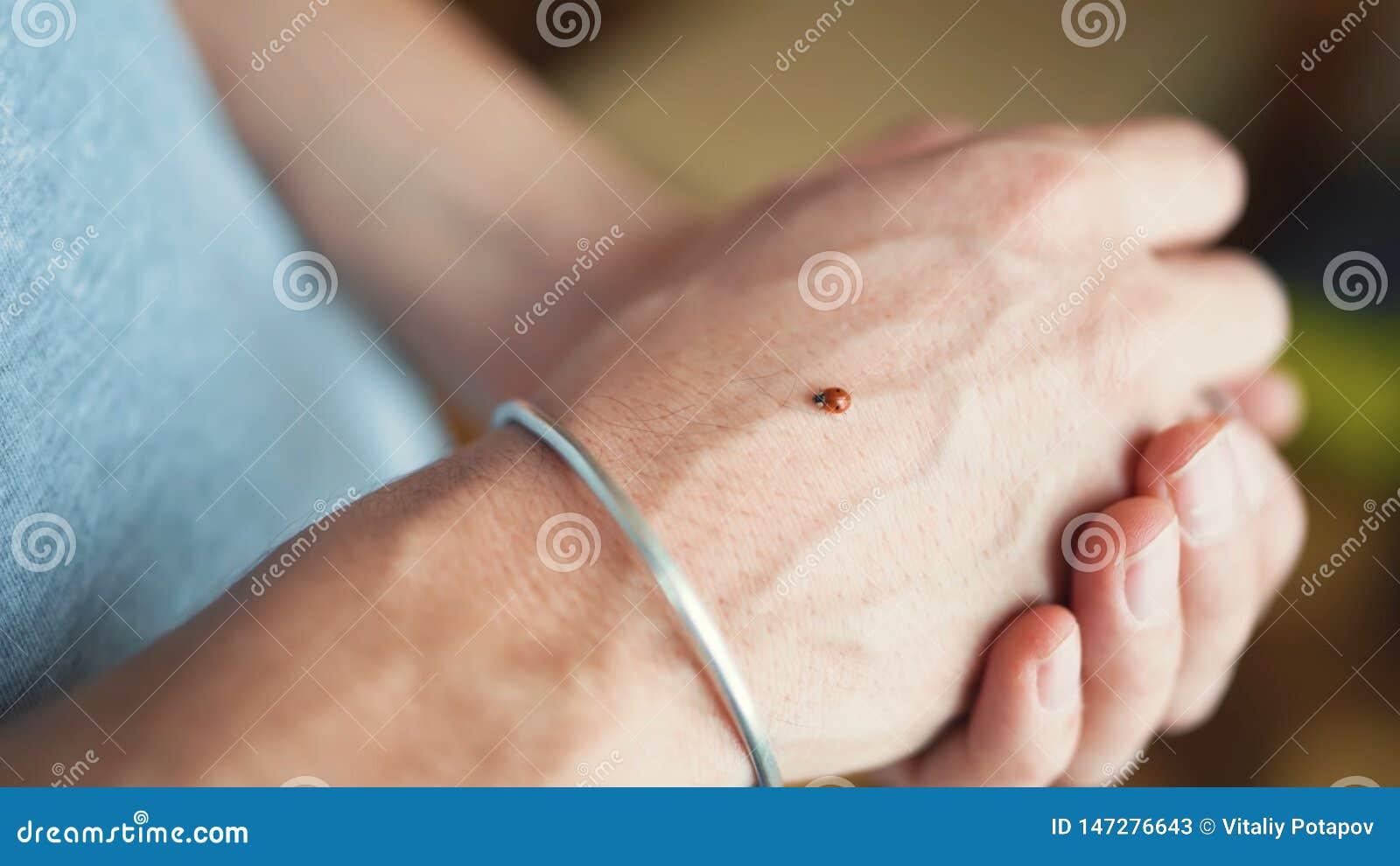 Ladybug a disposizione