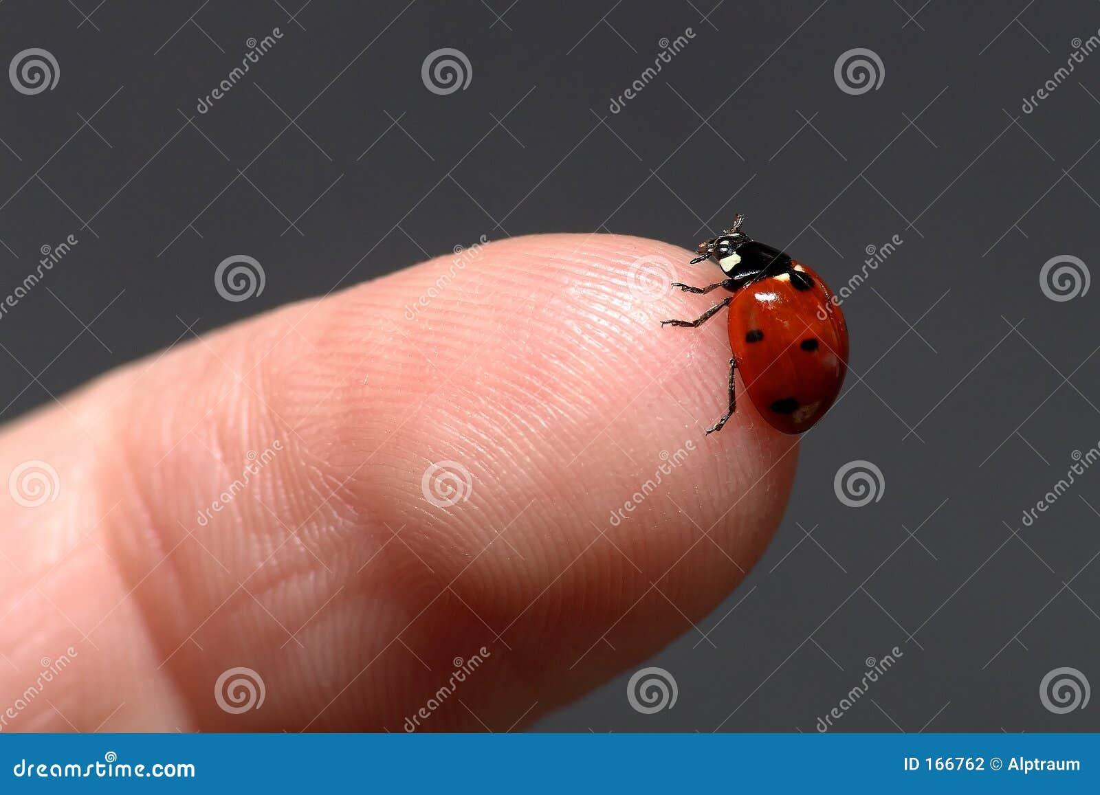 Ladybug en el dedo