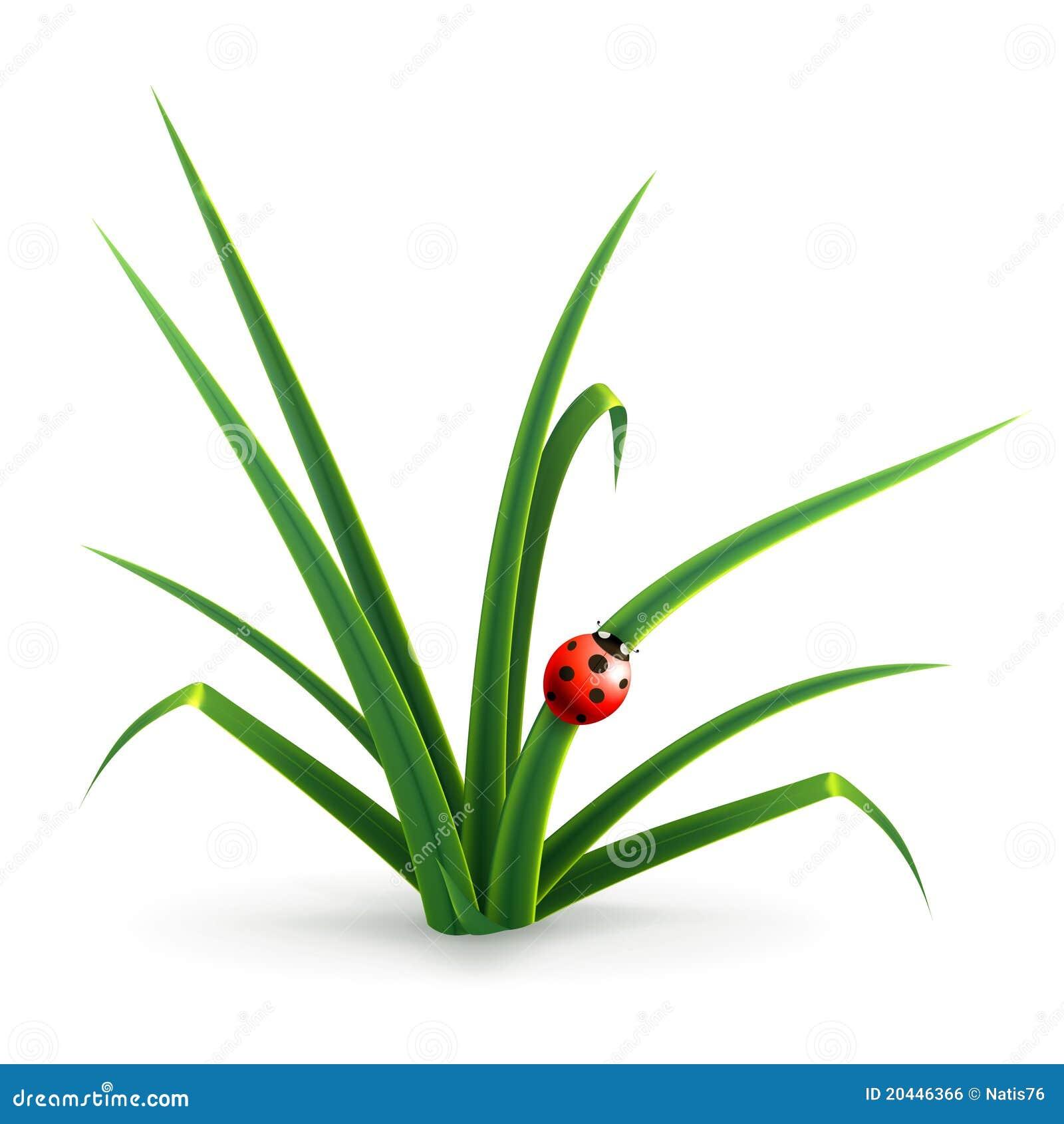 Ladybug and grass