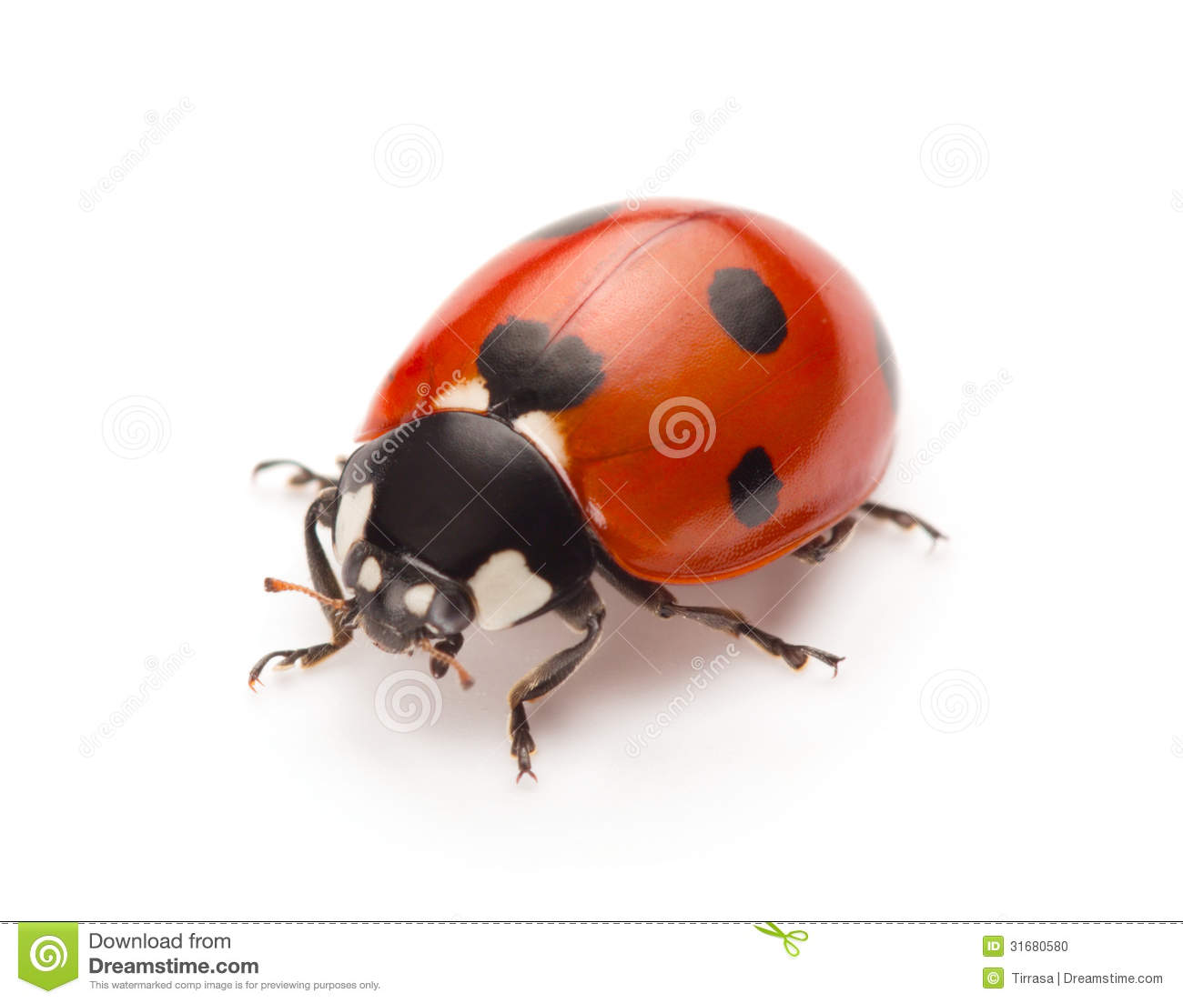 Ladybug stock photo. Image of beautiful, season, bright ...