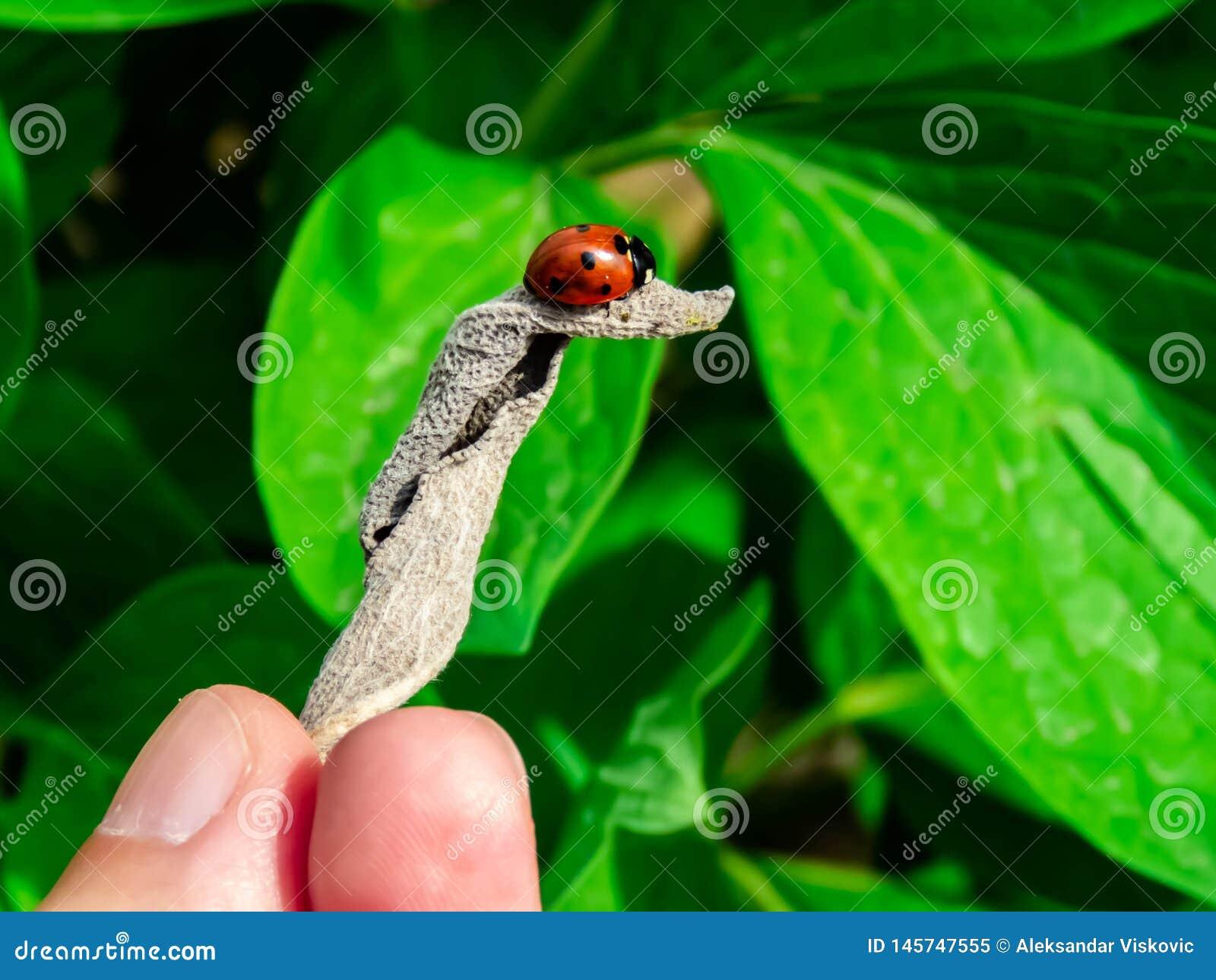 LadyBug [02]