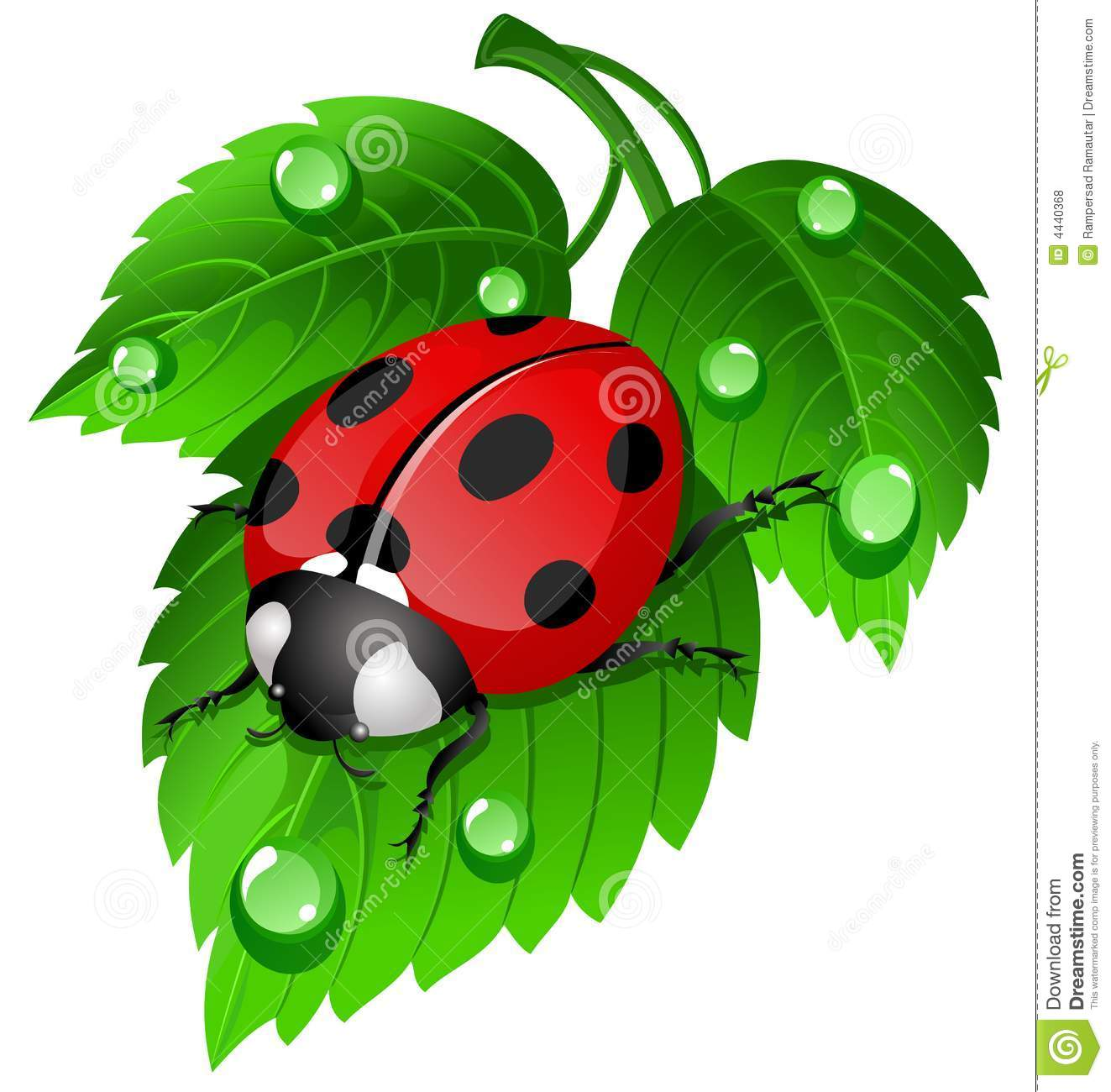 Ladybug On Leaf Royalty Free Stock Photos - Image: 4440368