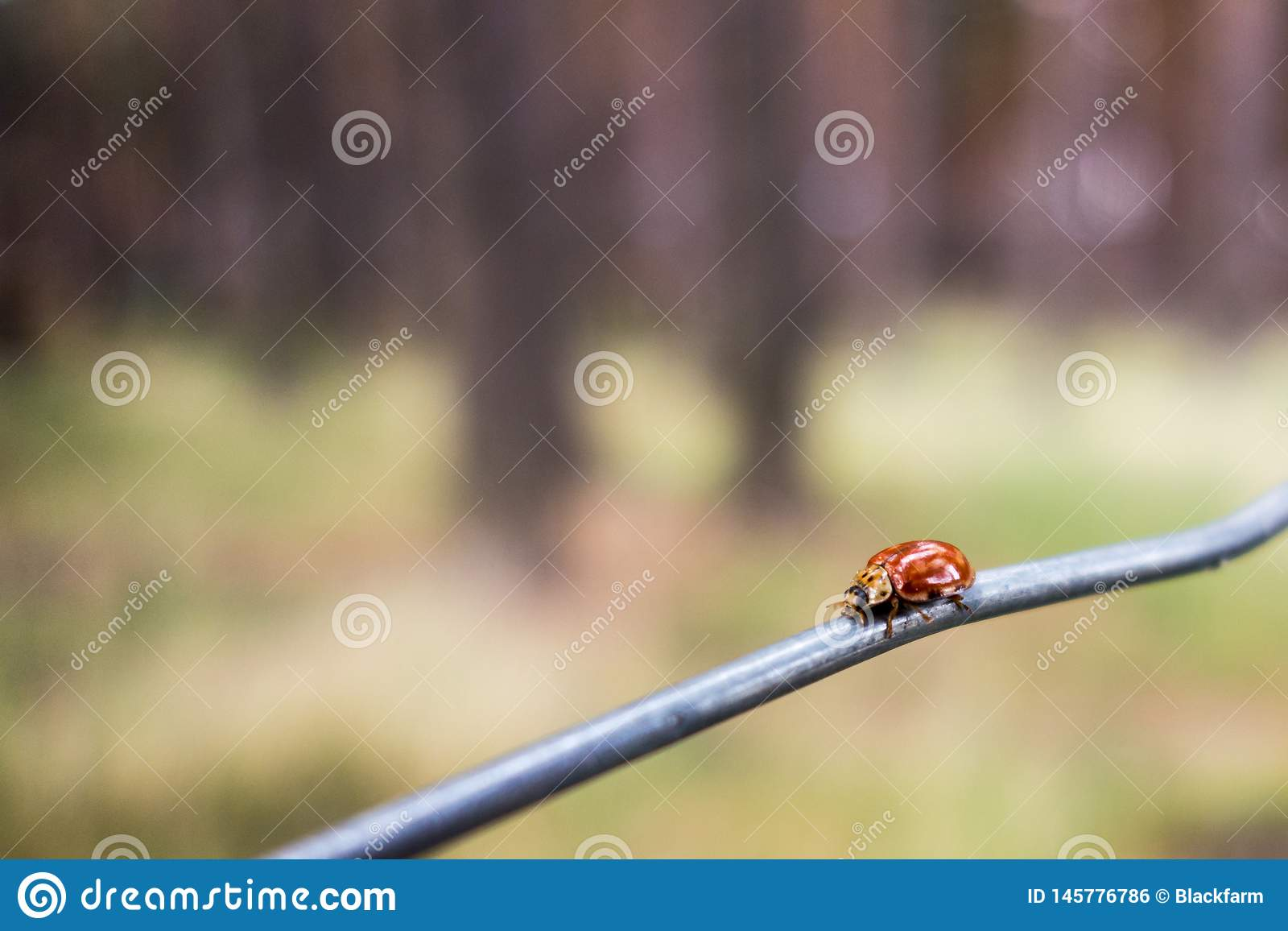 Ladybug over a wire