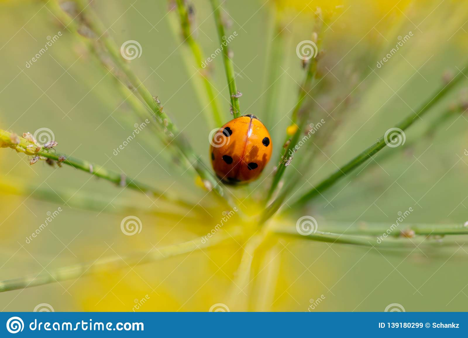Ladybug on a plant in the summer