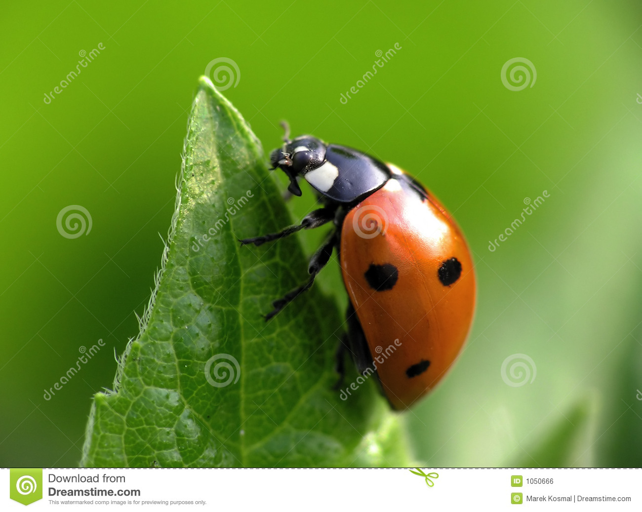 Ladybug on top