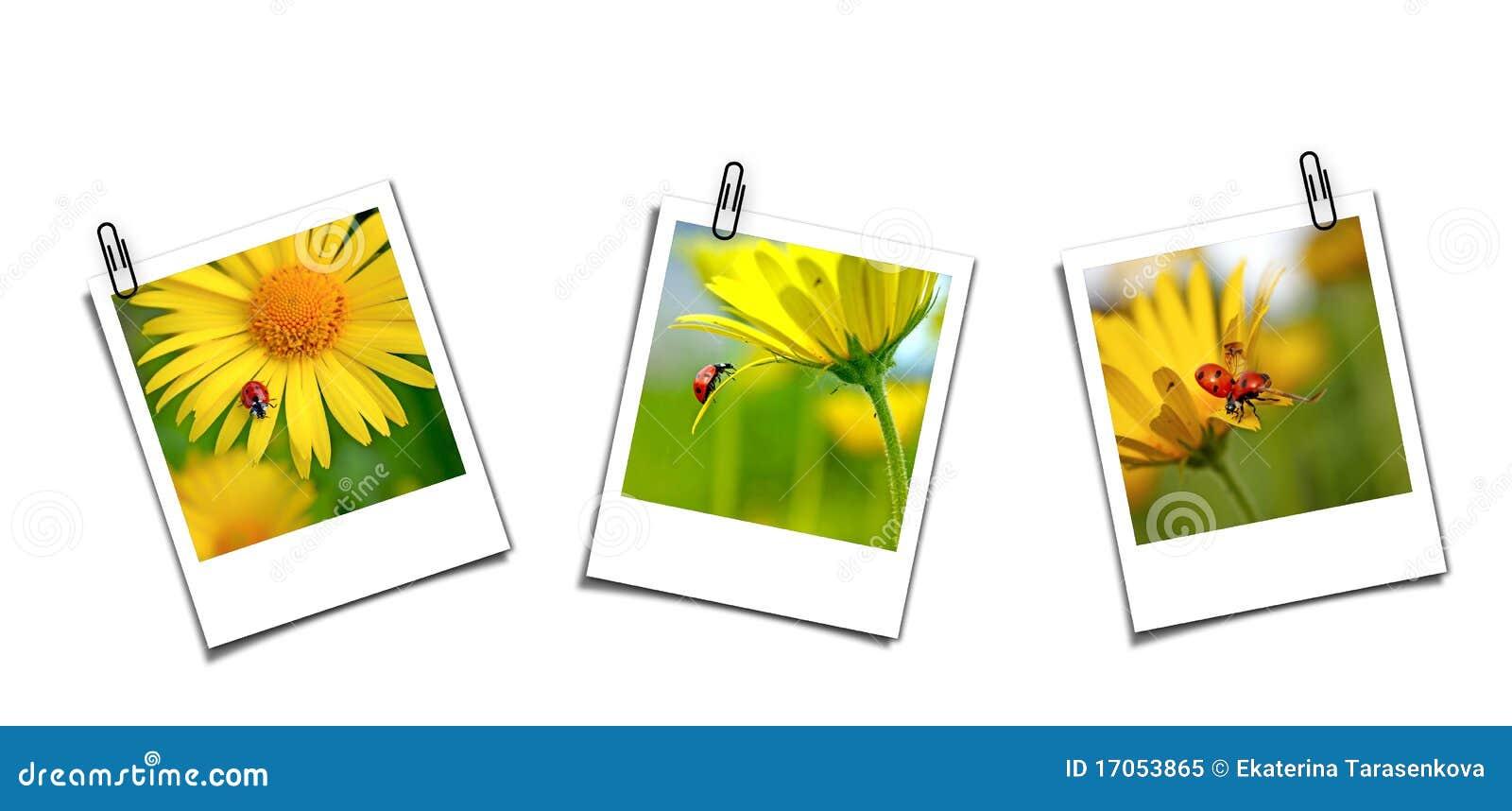 Ladybugs κάρτες τρία