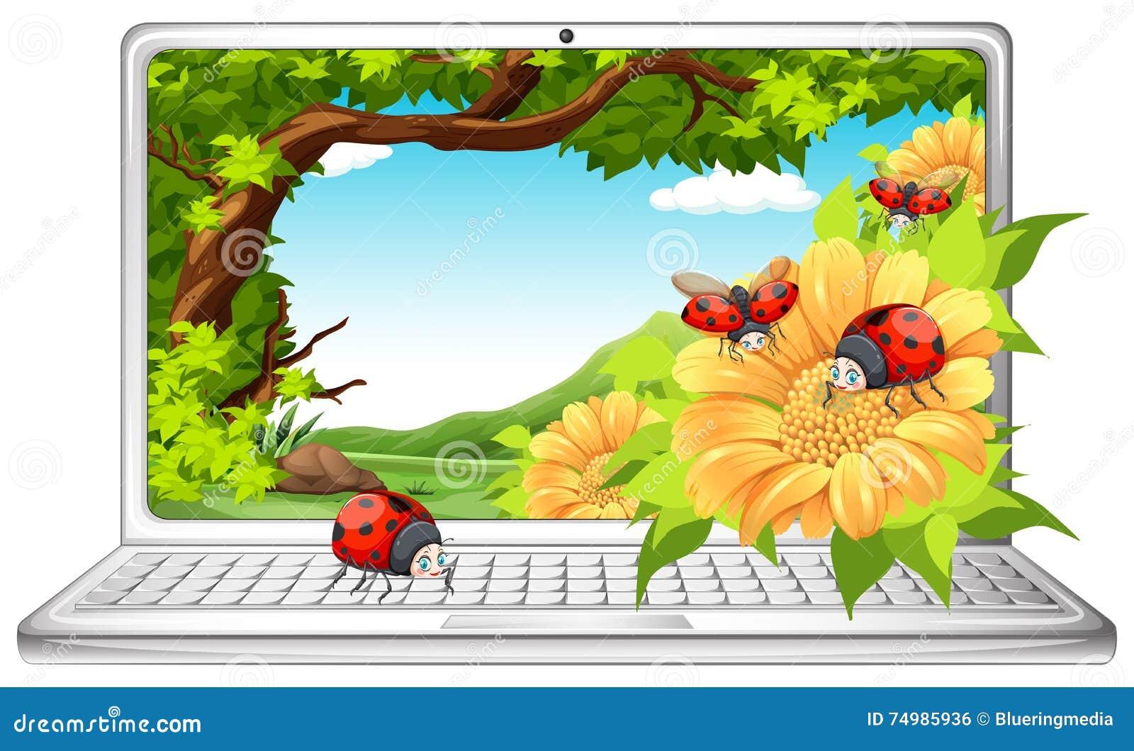 Marvelous Ladybugs In Garden On Computer Screen
