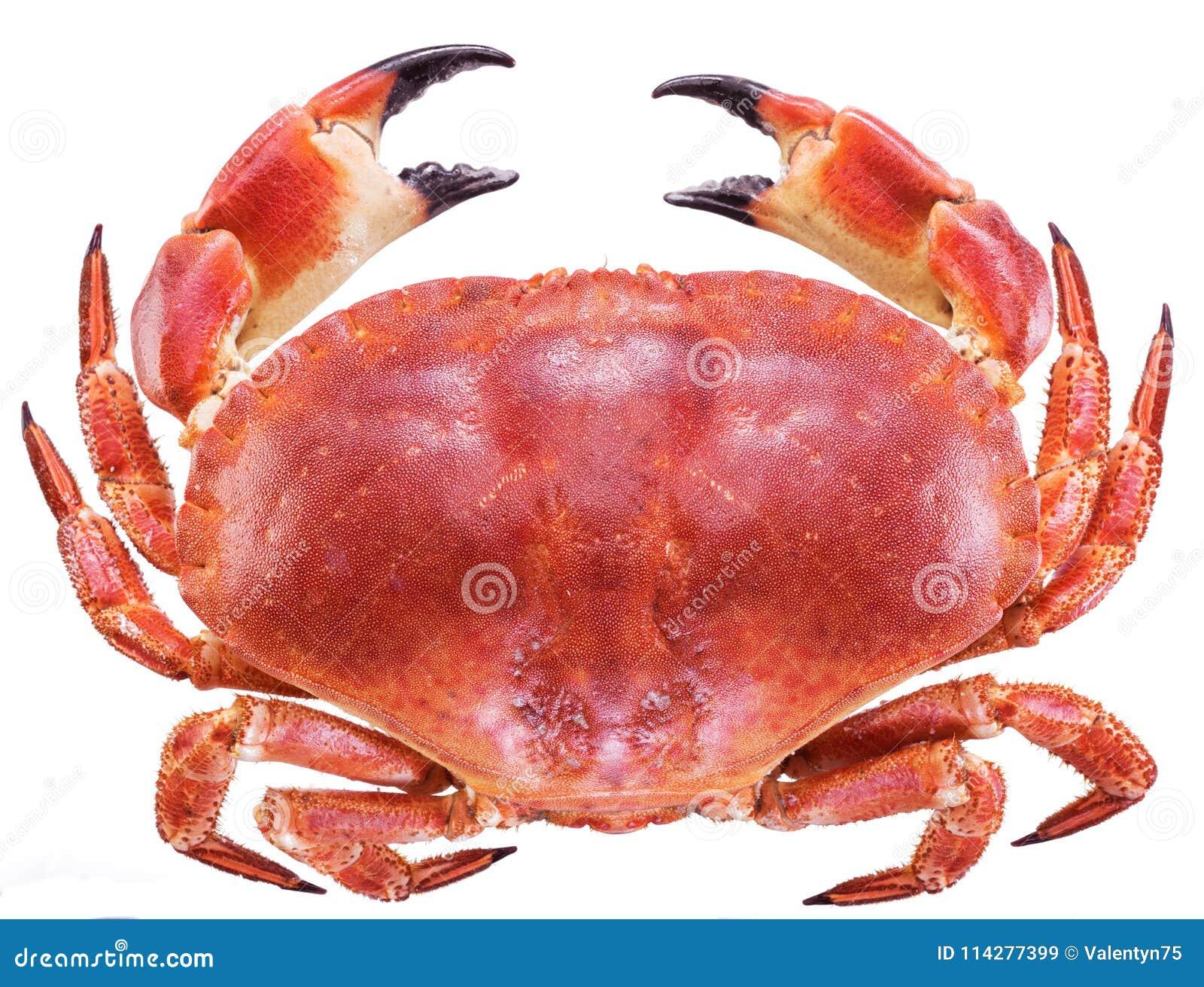 Lagad mat brun krabba eller ätlig krabba