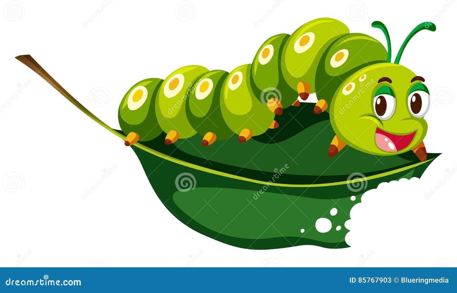 Lagarta bonito que mastiga a folha verde