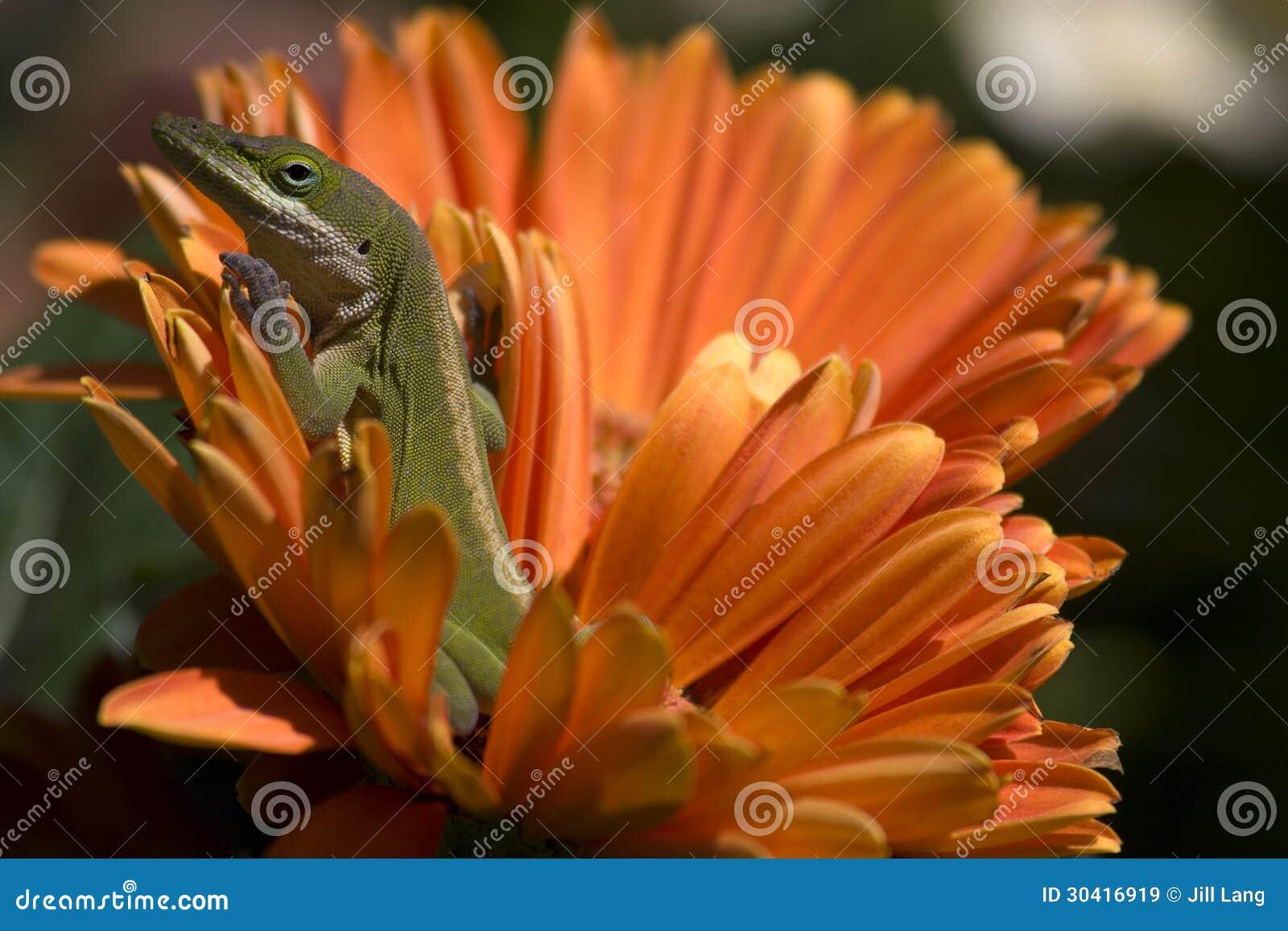 Lagarto na flor