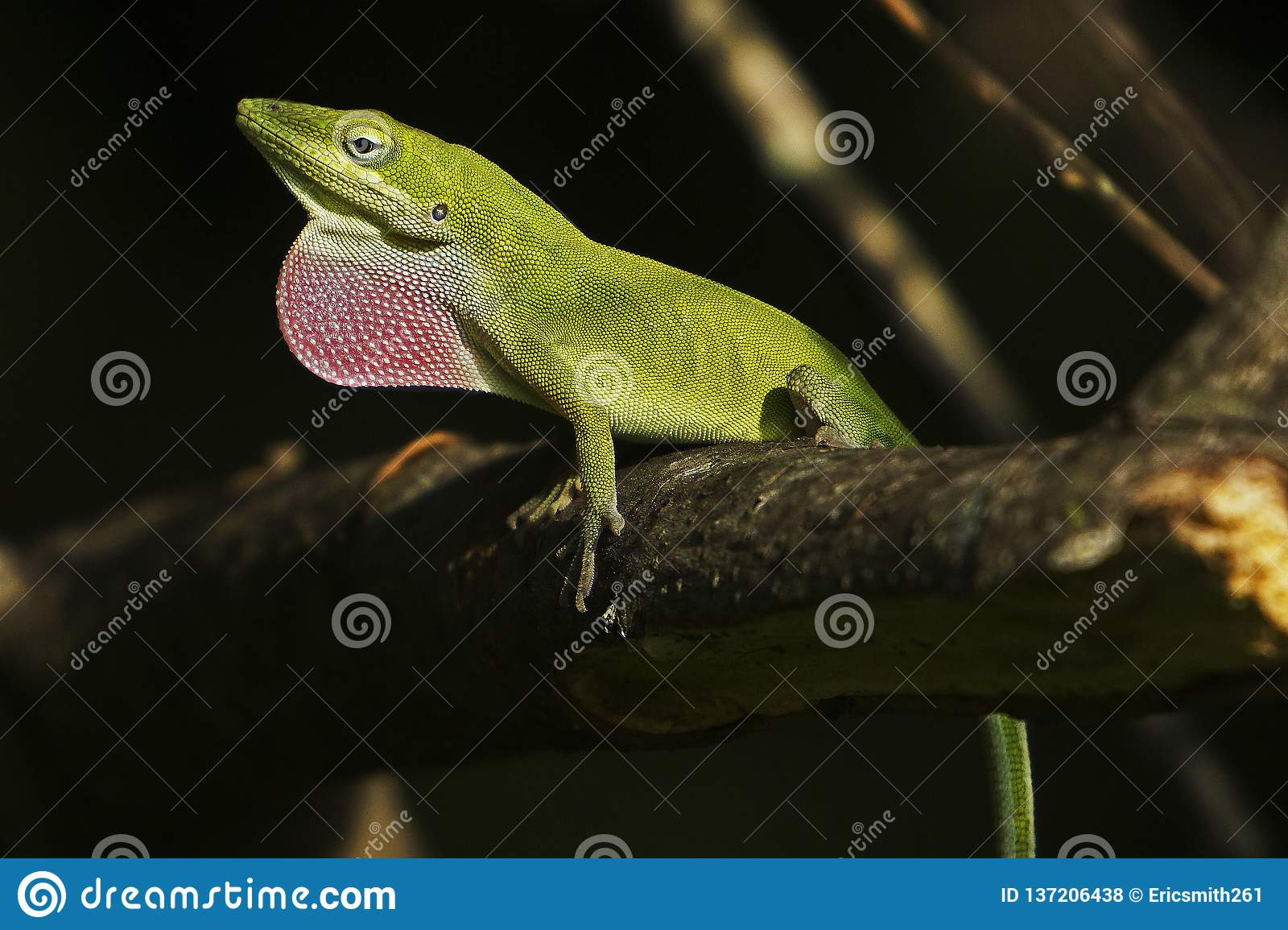 Lagarto verde de Anole