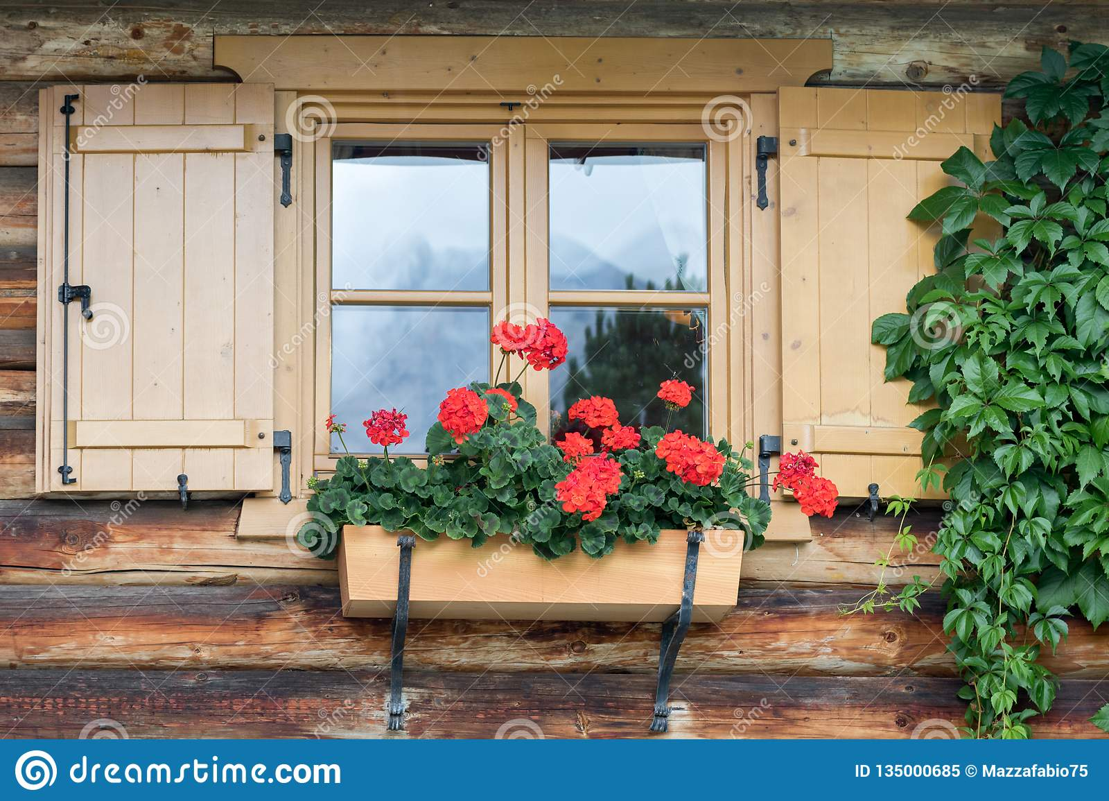Red geraniums in a planter are hung on a window sill of a Tyrolean house