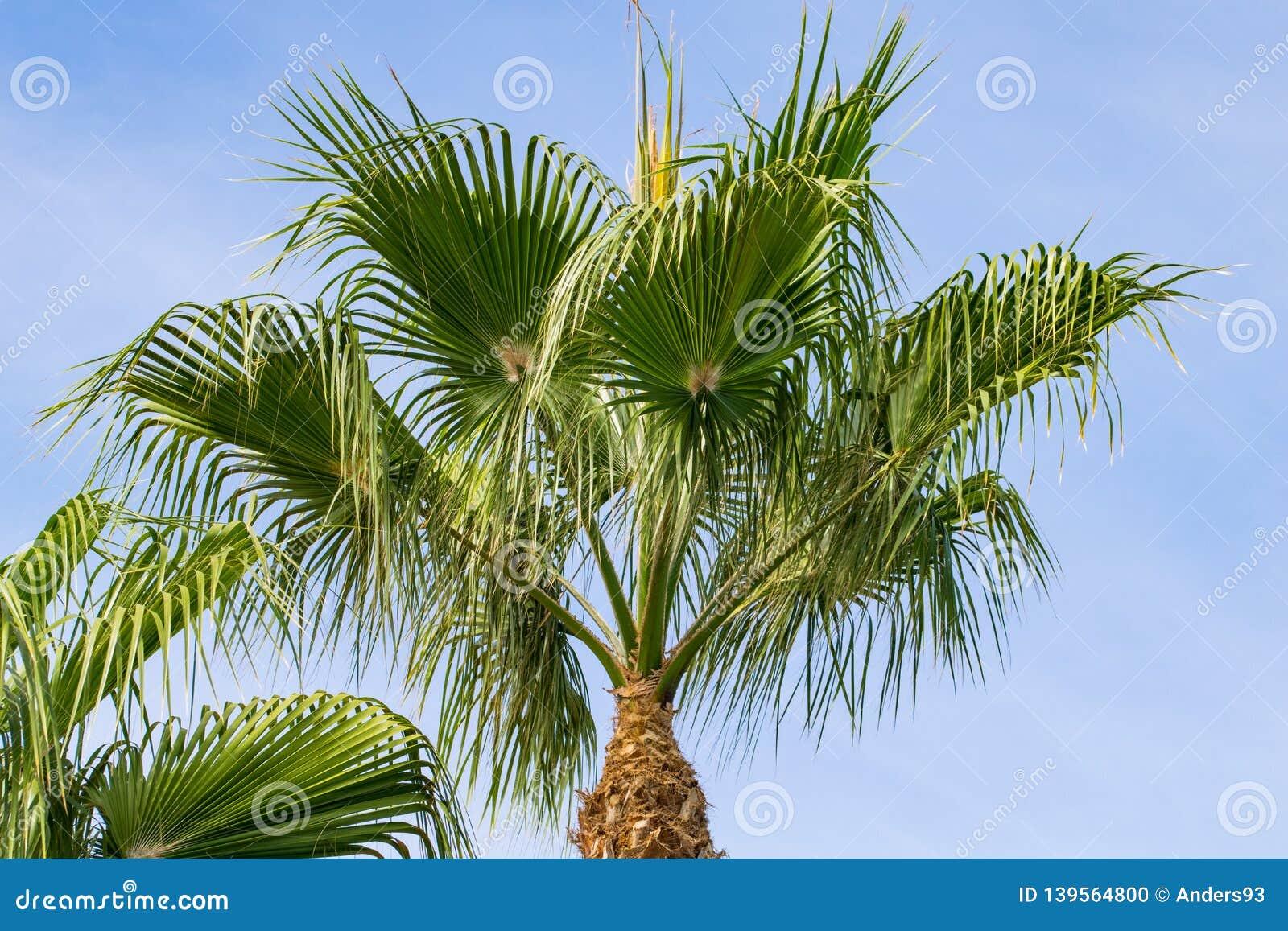 Lage hoekmening van tropische palm