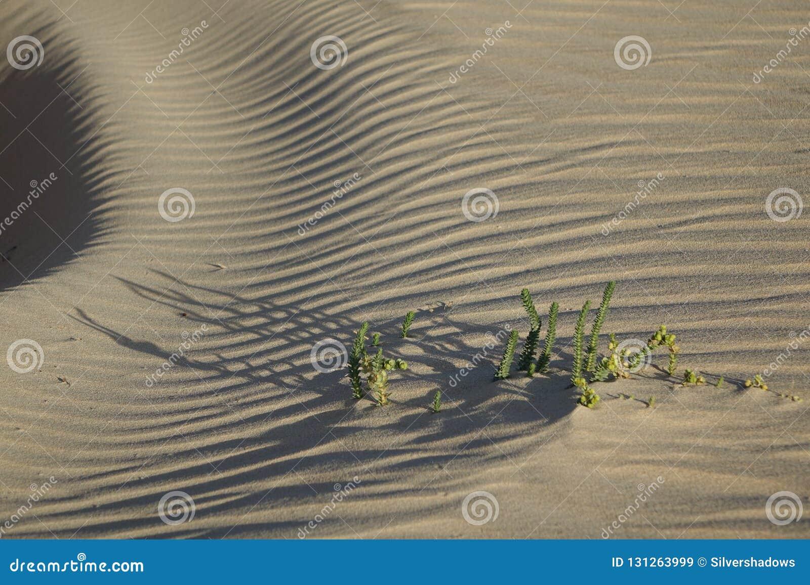Lage zon recente middag, in het natuurreservaat, Corralejo, Fuertevent