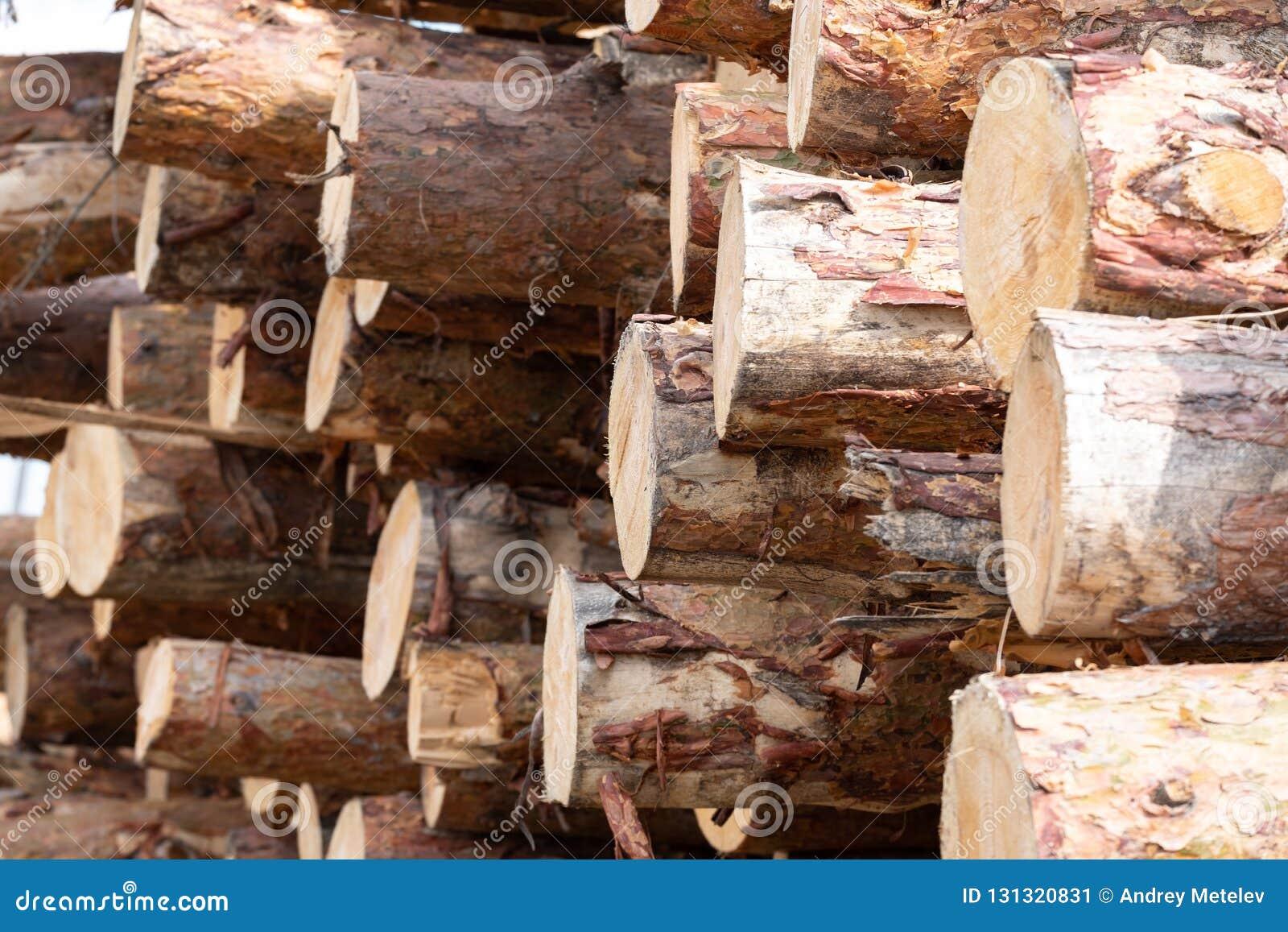 Lagerung von gesägten Kiefern auf dem Schnittbereich, viel angehäufte Kiefer