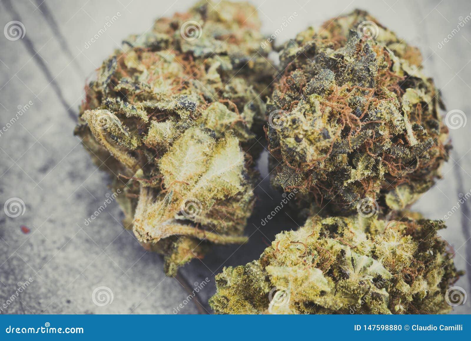 Laglig cannabis blommar makrodetaljen