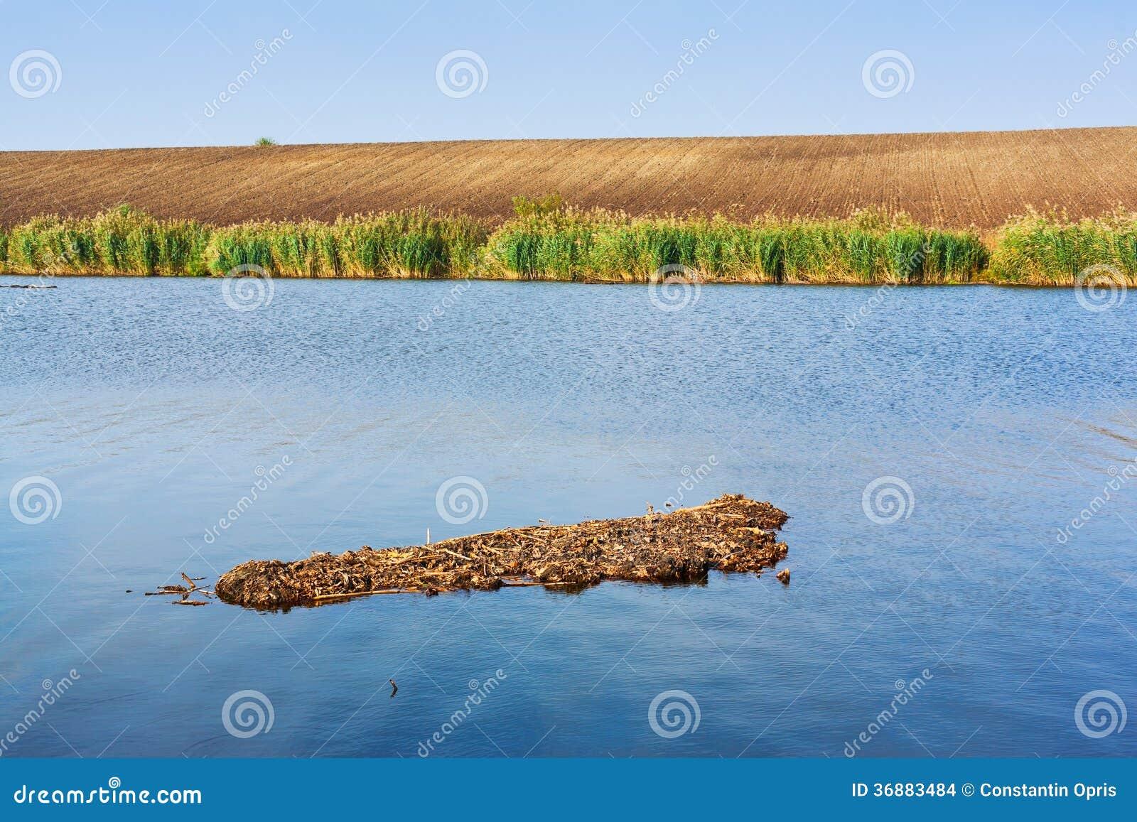 Download Lago basso fotografia stock. Immagine di shallow, lago - 36883484
