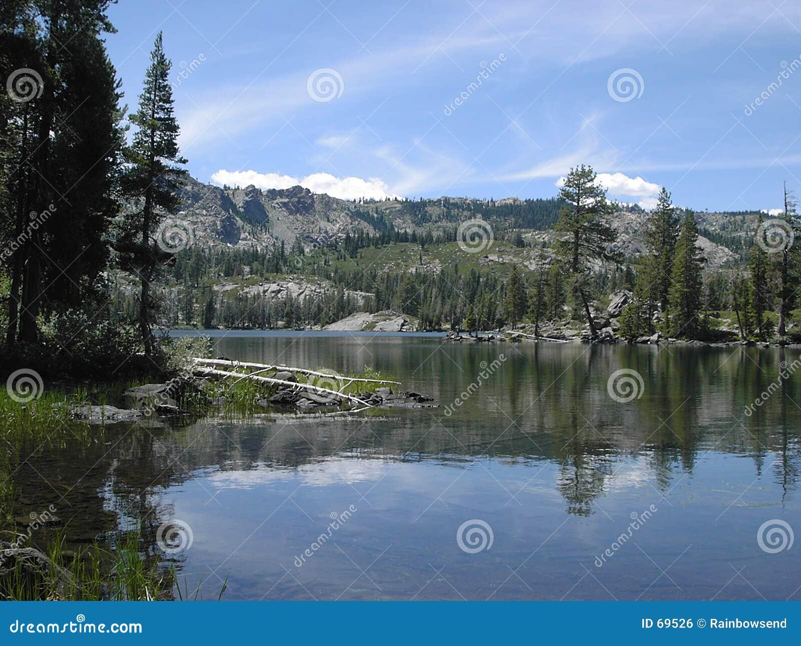 Lago bear