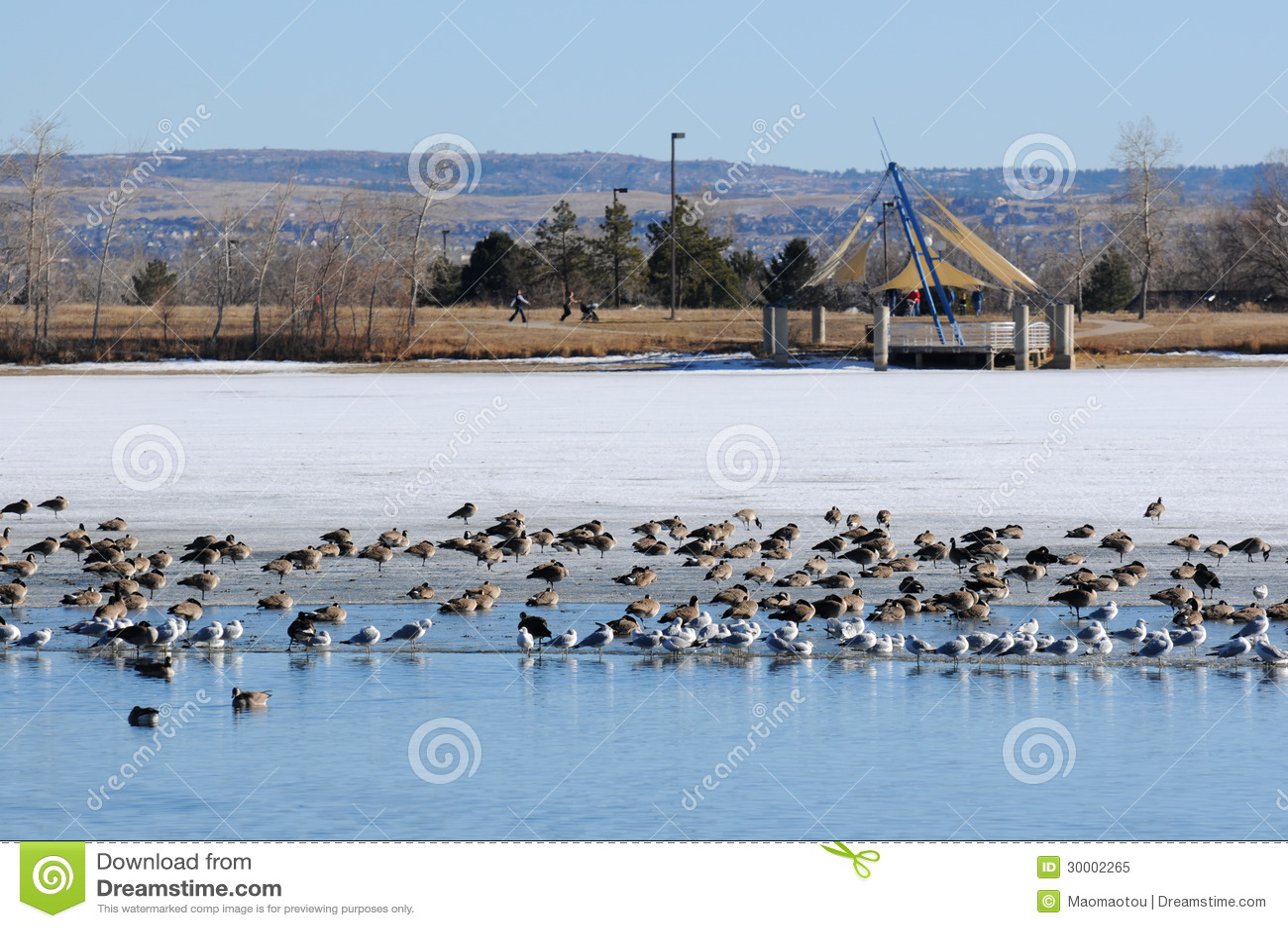 Lago congelado em um parque do inverno