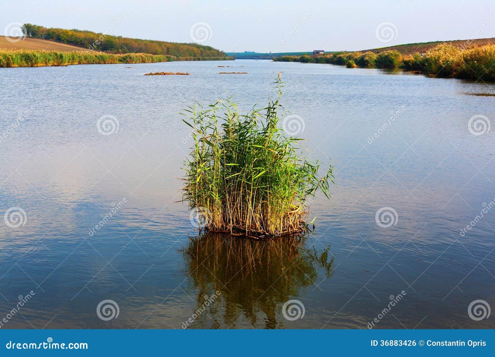 Download Lago D'acqua Dolce E Vegetazione Fotografia Stock - Immagine di naughty, daylight: 36883426