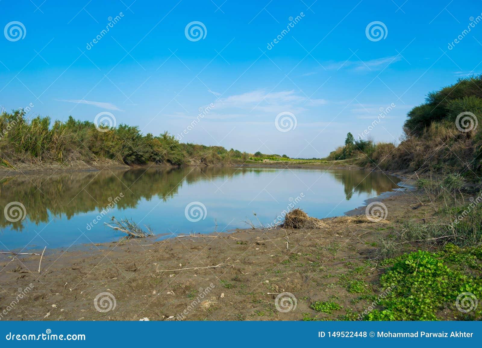 Lago del agua azul en ajungle