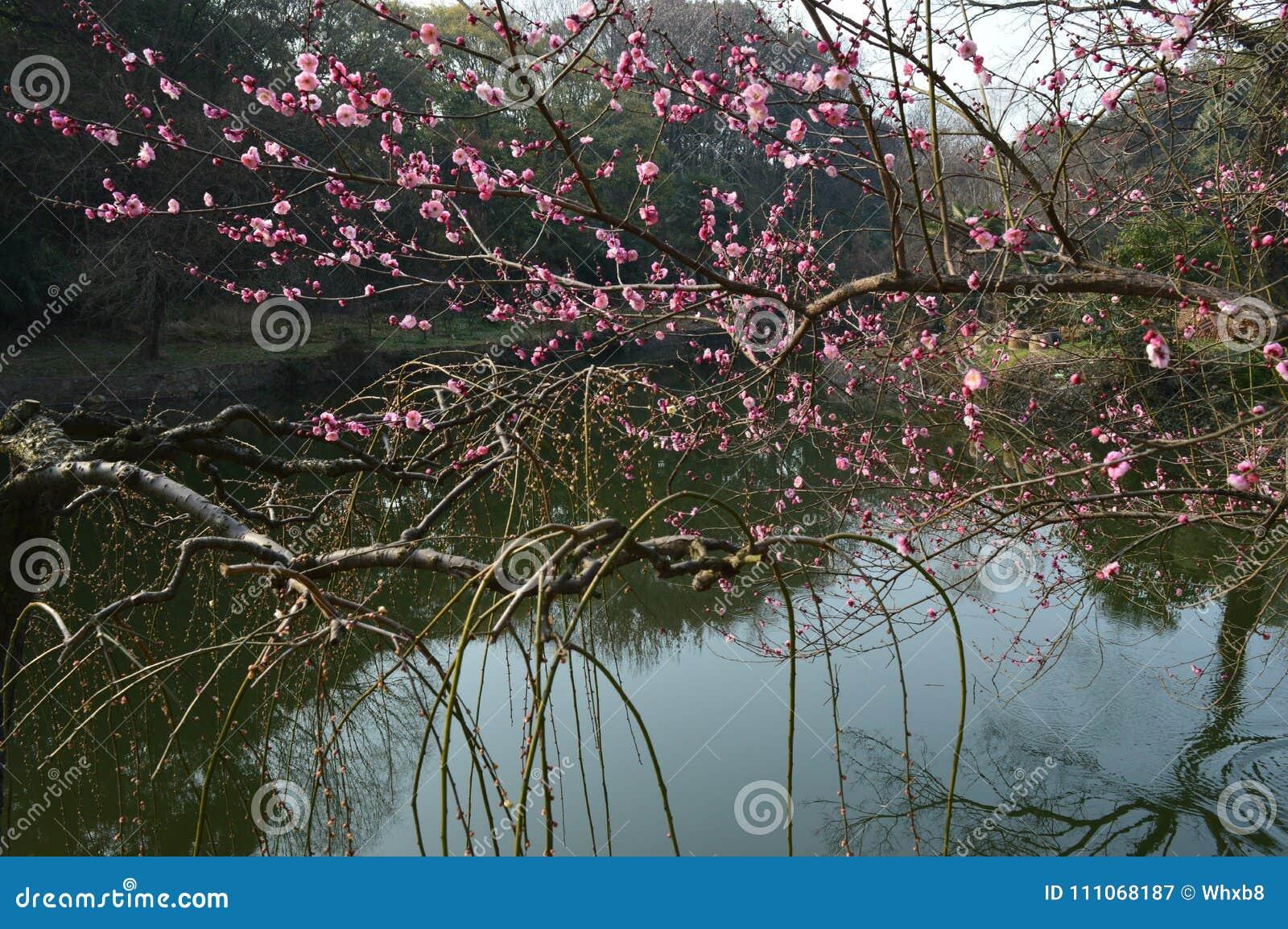 Lago del este Plum Garden