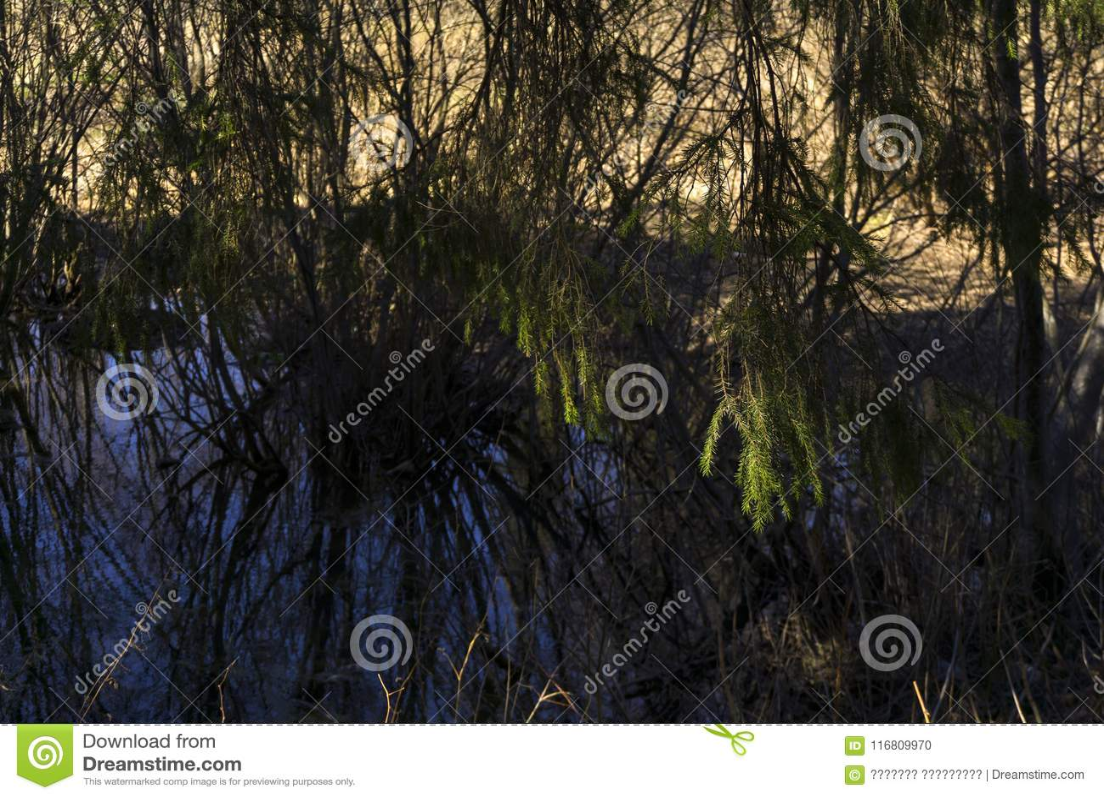 Lago di oxbow isolato in primavera River Valley